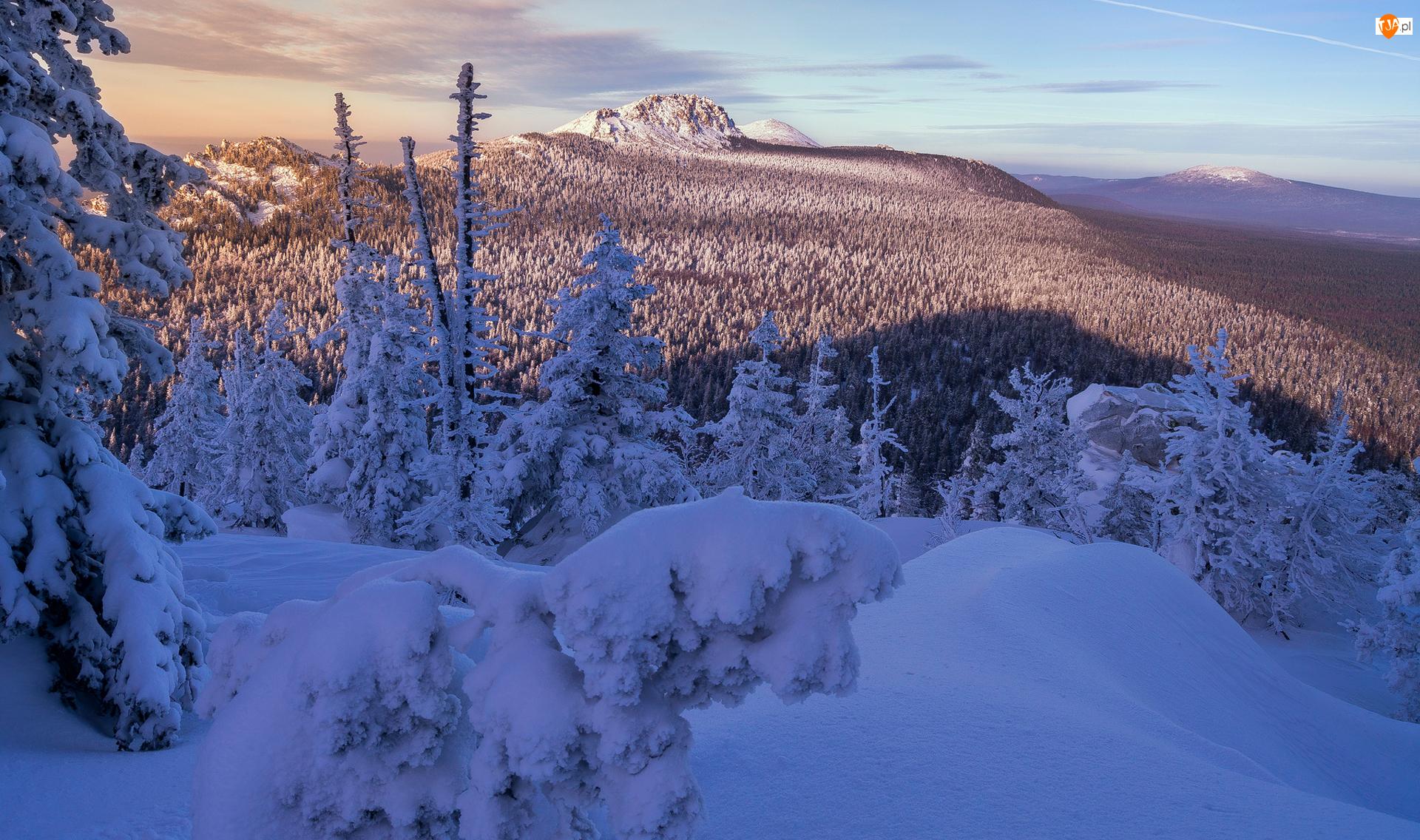 Wzgórza, Drzewa, Góry, Zima, Ośnieżone
