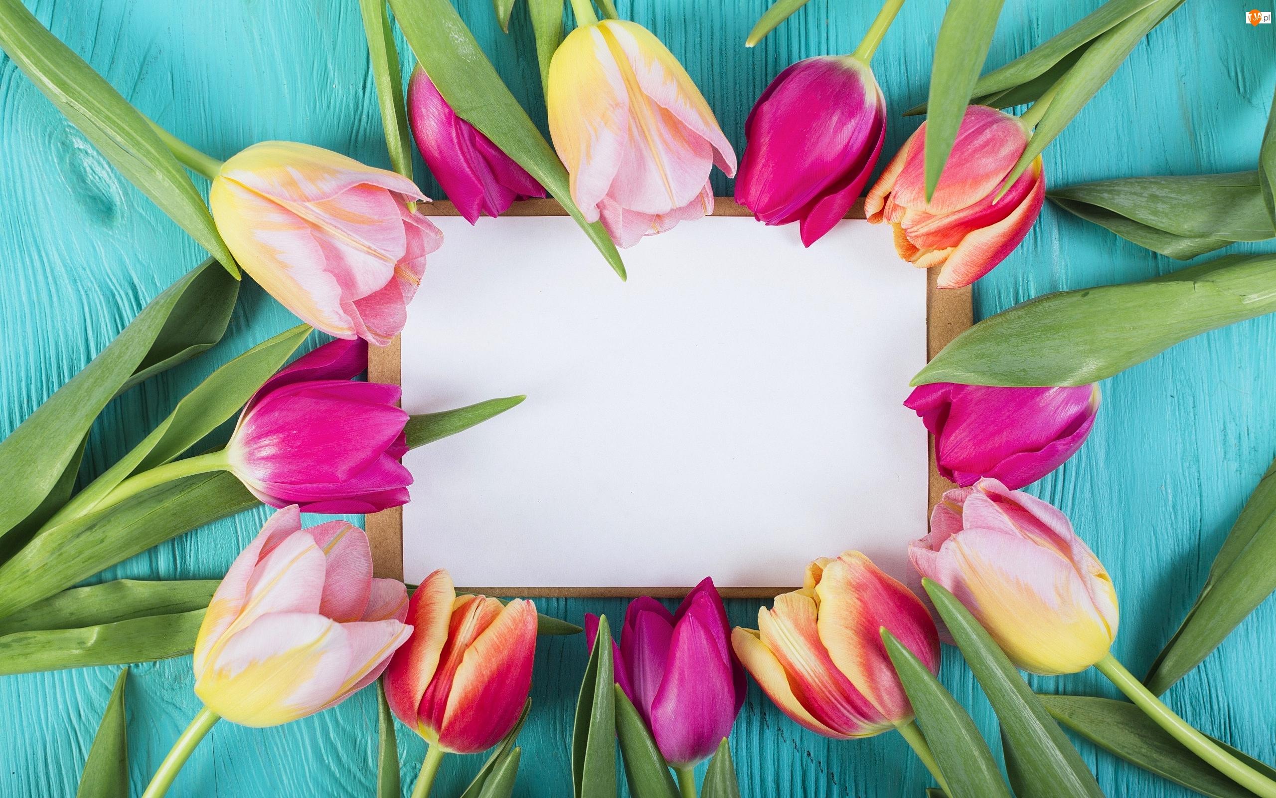 Tulipany, Kolorowe, Koperta, Deski, Kartka, Niebieskie