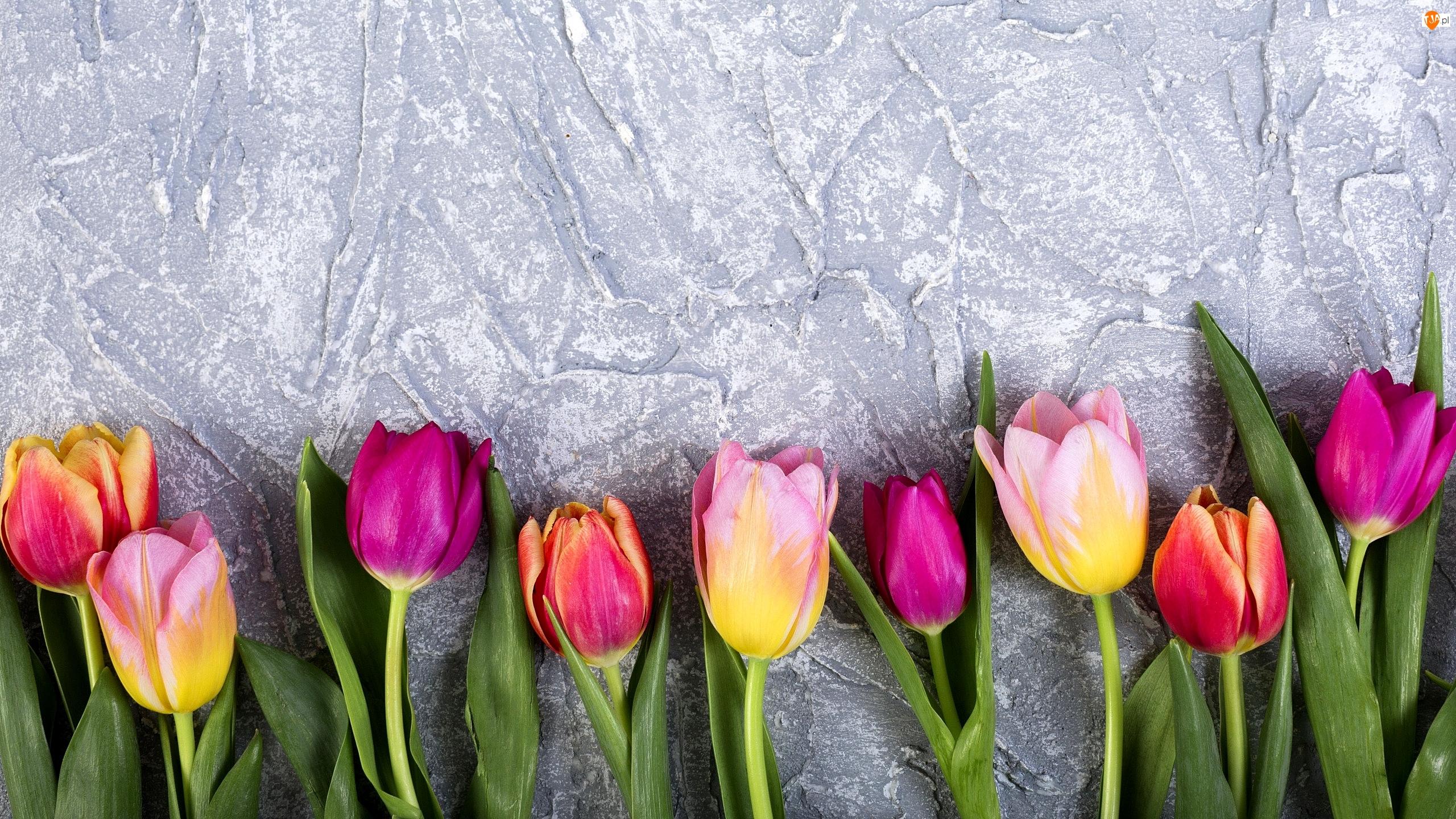 Tło, Kolorowe, Tulipany, Szare