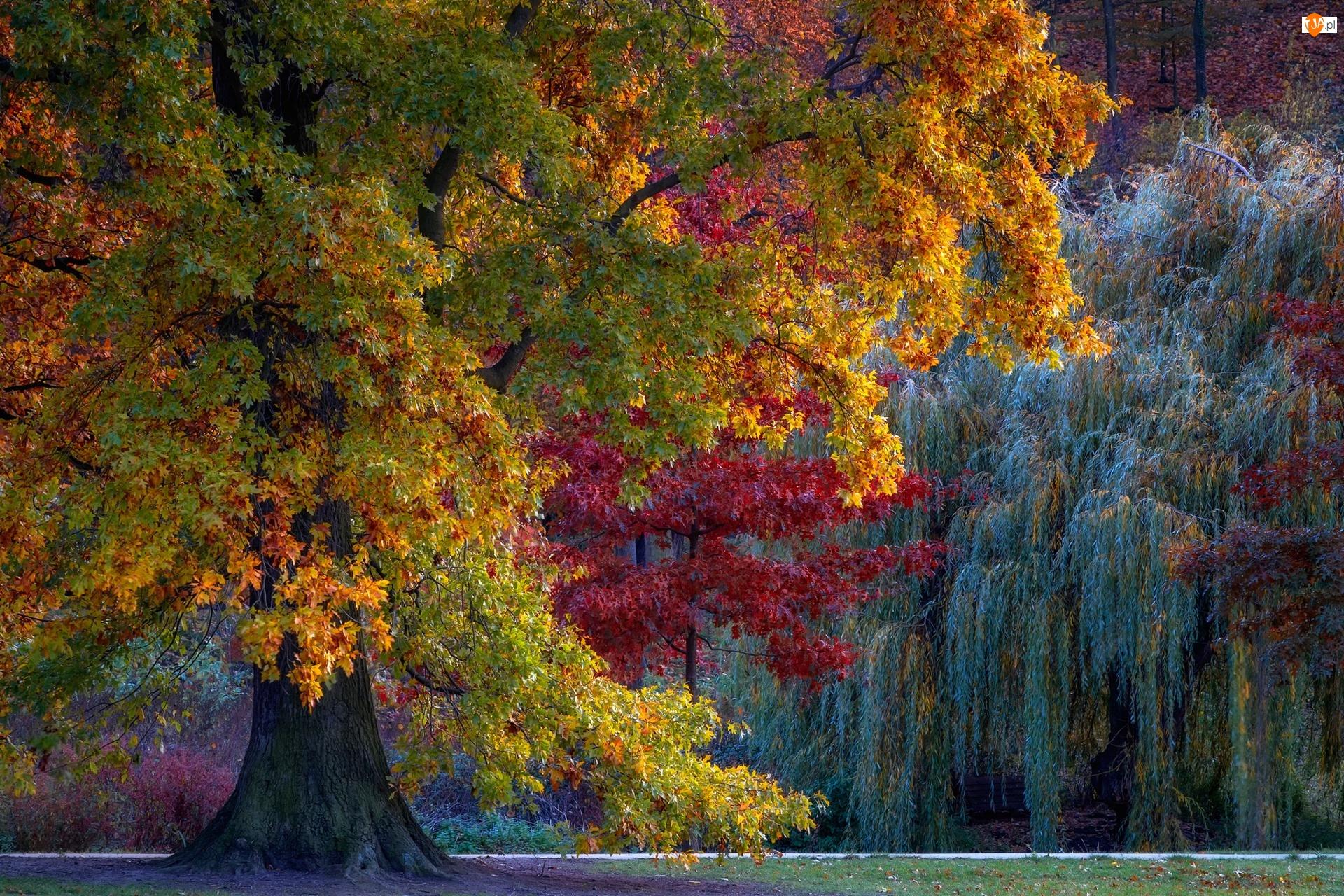 Drzewa, Kolorowe, Jesienne