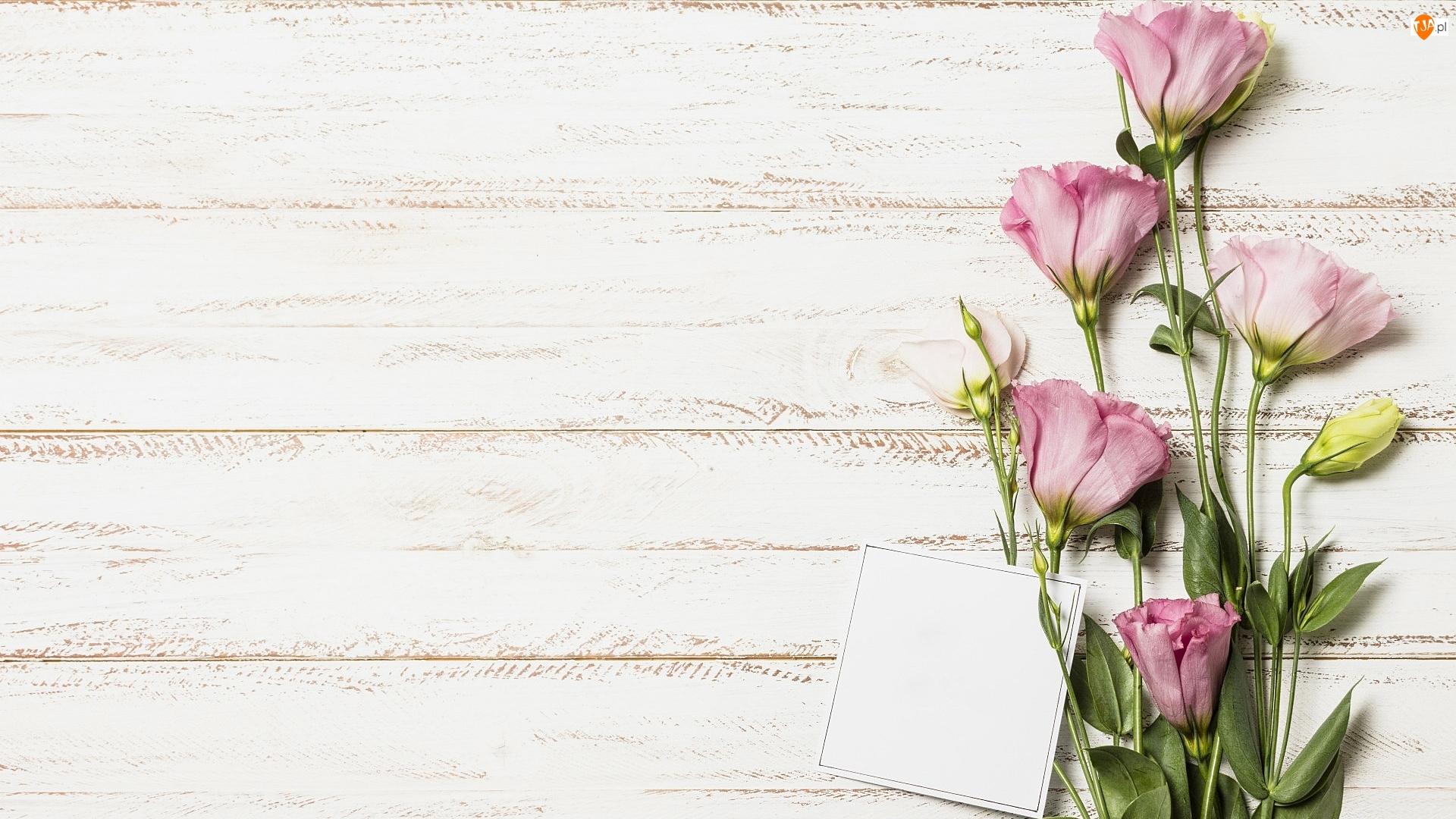 Kartka, Deski, Eustoma, Kwiaty, Obdrapane