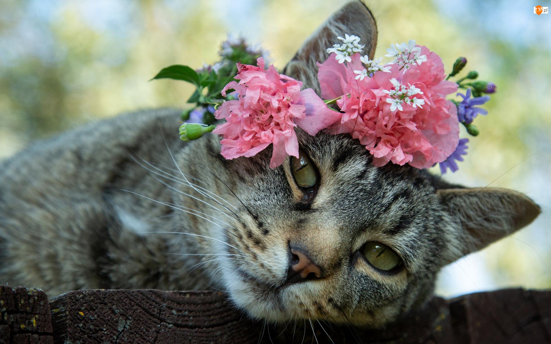 Kwiaty, Bury, Kot