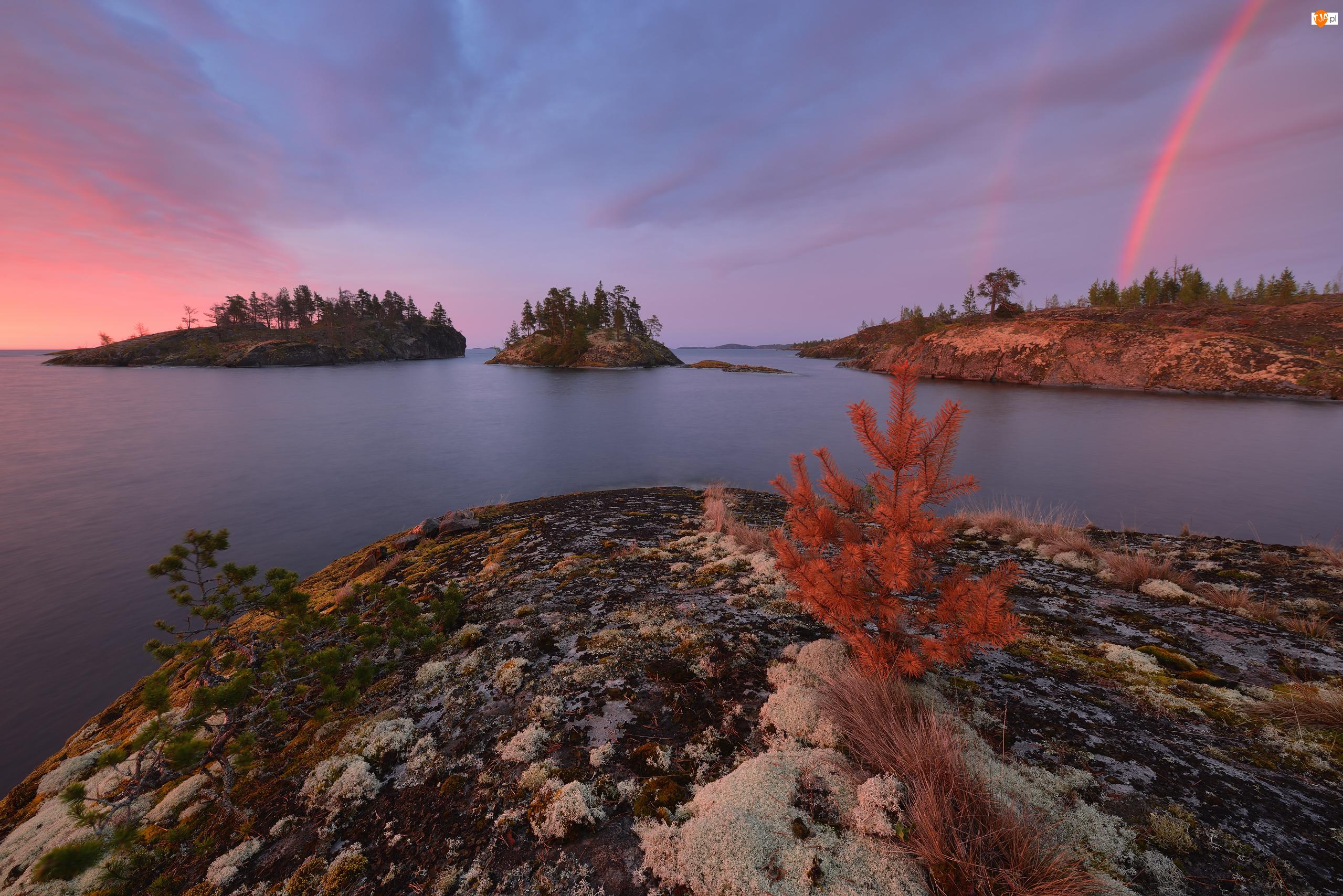 Wschód słońca, Jezioro Ładoga, Rośliny, Karelia, Wysepki, Tęcza, Rosja, Drzewa