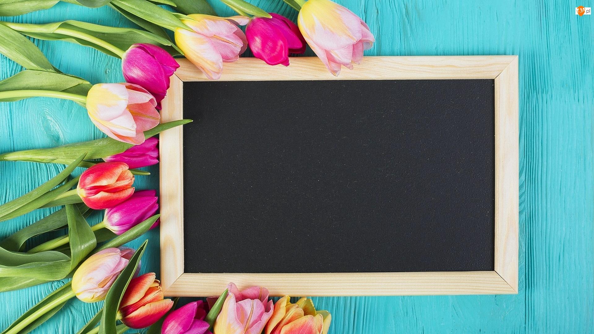 Tabliczka, Deski, Tulipany, Kolorowe, Niebieskie