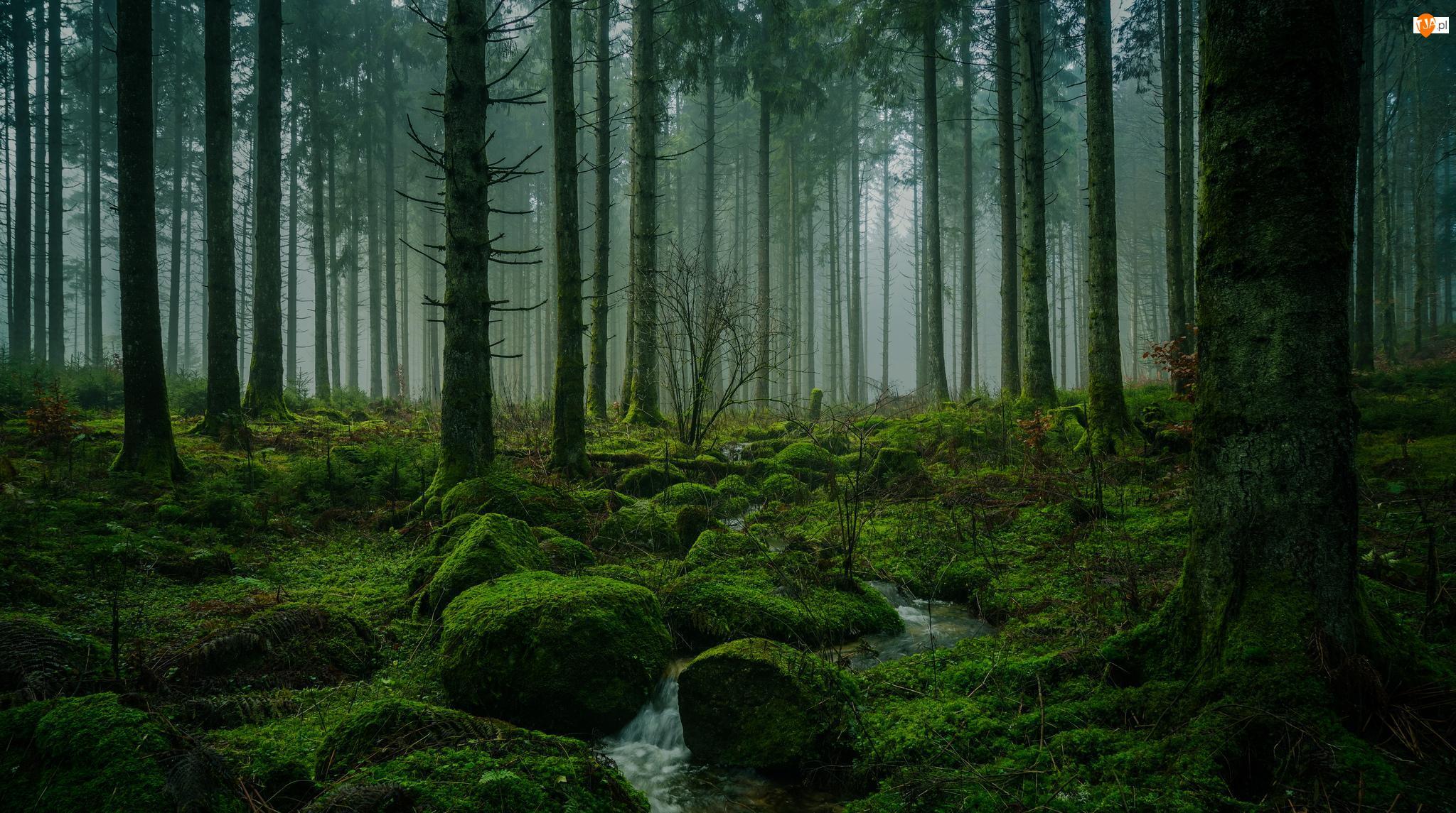 Omszałe, Strumień, Drzewa, Las, Kamienie