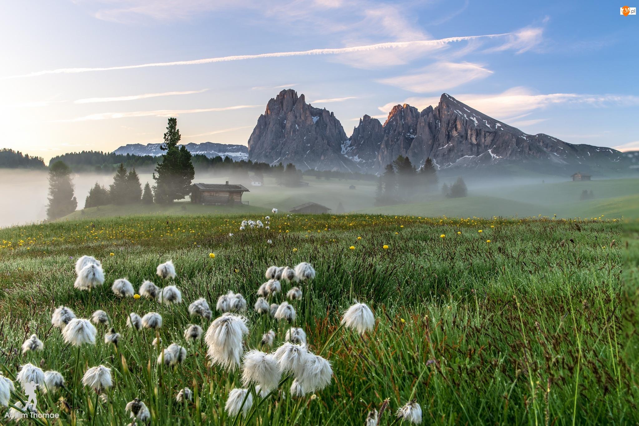 Włochy, Kwiaty, Dolomity, Dolina Val Gardena, Góry Sassolungo, Domy, Mgła, Łąka, Płaskowyż Seiser Alm