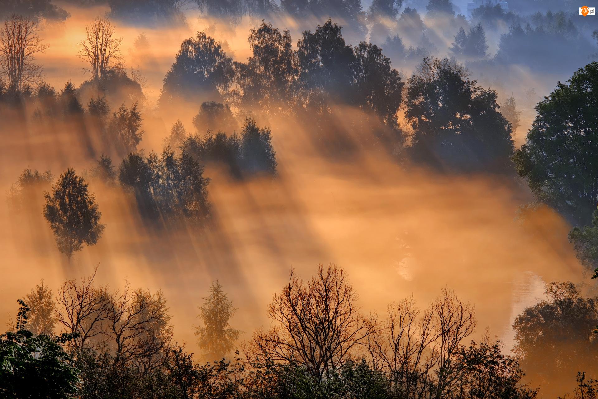 Przebijające światło, Drzewa, Las, Mgła