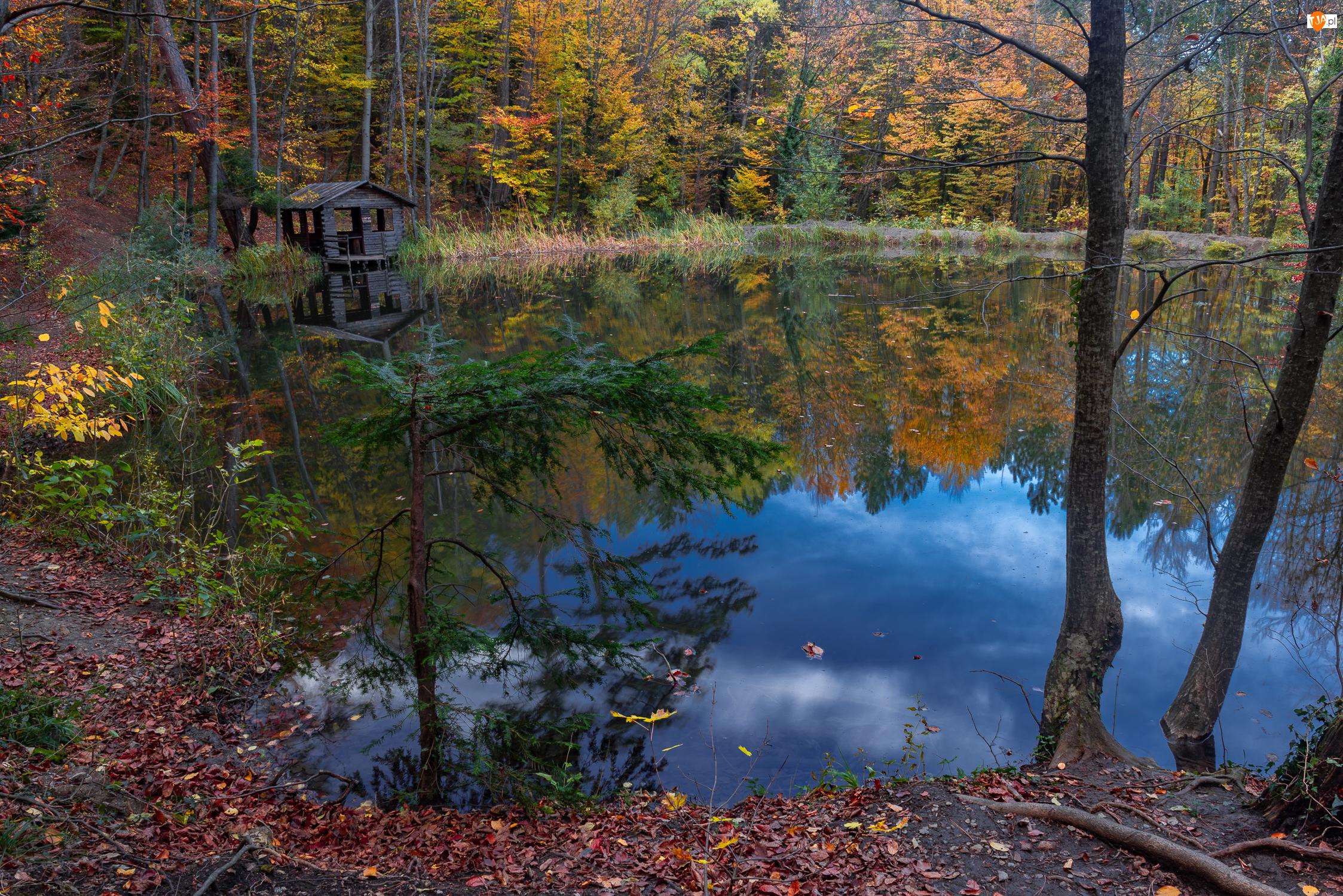 Jezioro, Jesień, Drzewa, Las, Altanka