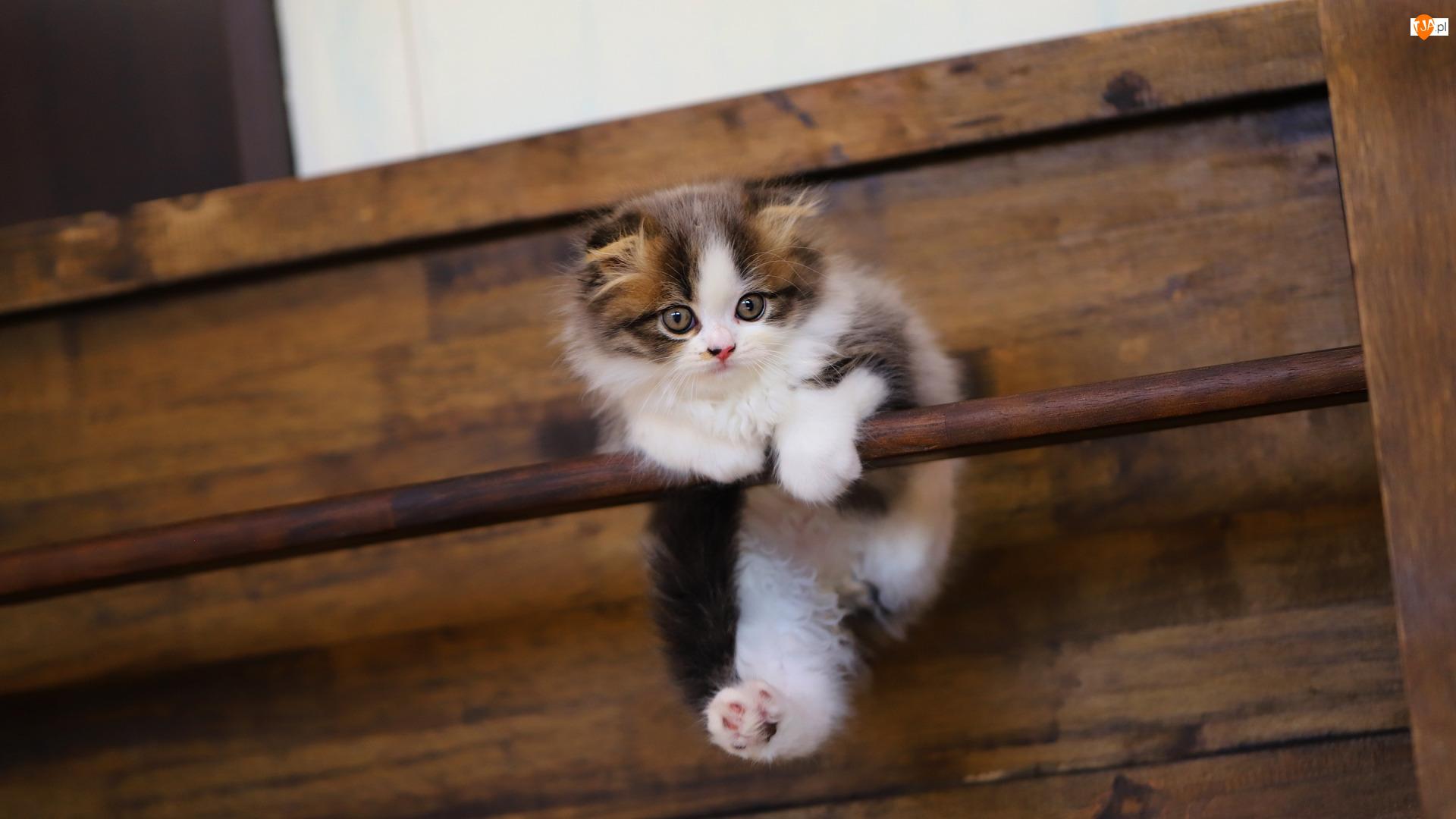 Drążek, Kot, Mały, Zabawa