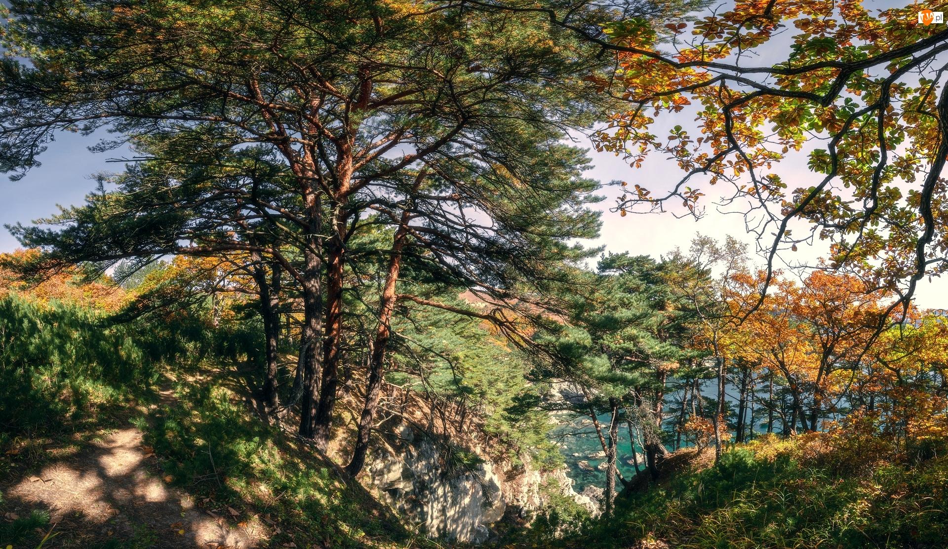 Wzgórze, Skały, Drzewa
