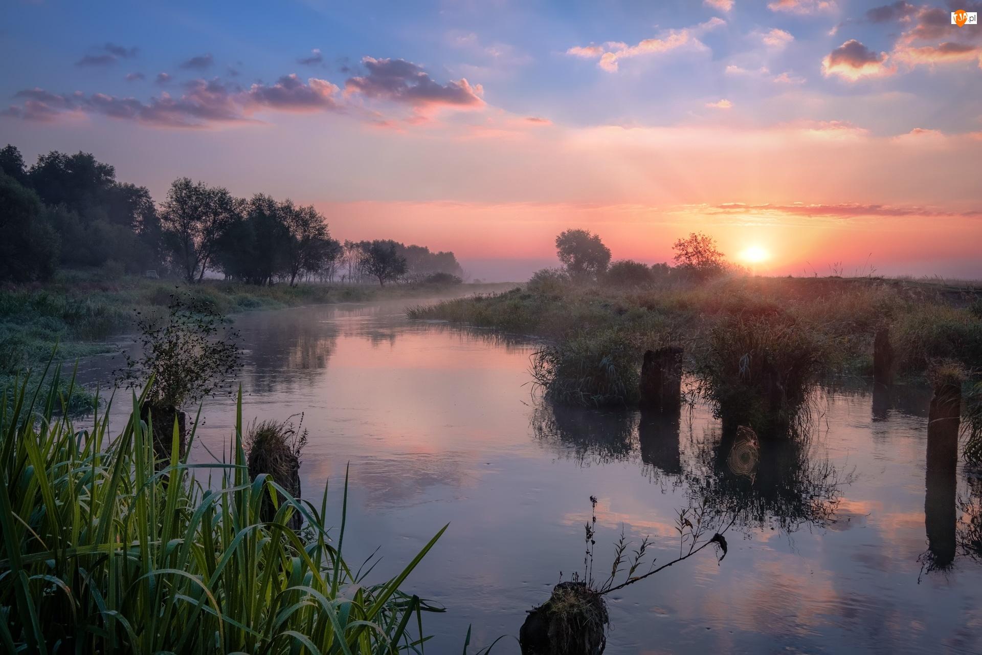 Rosja, Drzewa, Obwód włodzimierski, Mgła, Wschód słońca, Trawa, Drewniane, Rzeka Sherna, Kołki