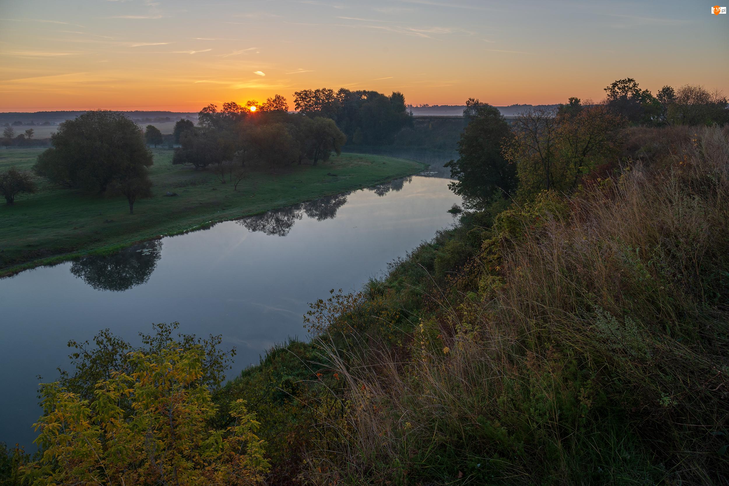 Trawa, Wschód słońca, Drzewa, Rzeka, Krzewy