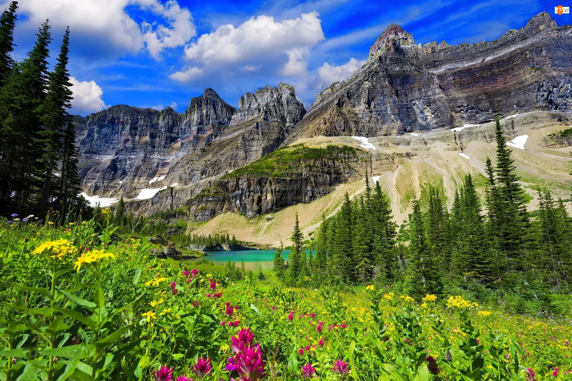 Drzewa, Łąka, Niebo, Kwiaty, Jezioro Iceberg Lake, Stan Montana, Świerki, Góry, Trawa, Park Narodowy Glacier, Stany Zjednoczone
