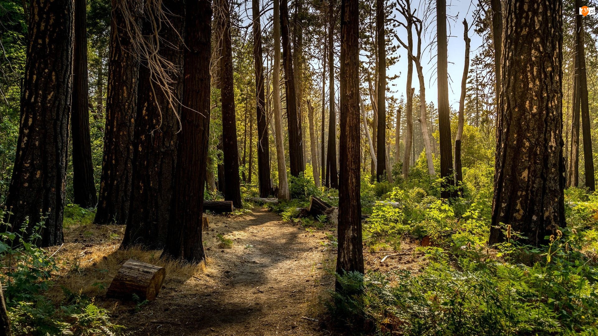 Krzewy, Las, Drzewa, Ścieżka