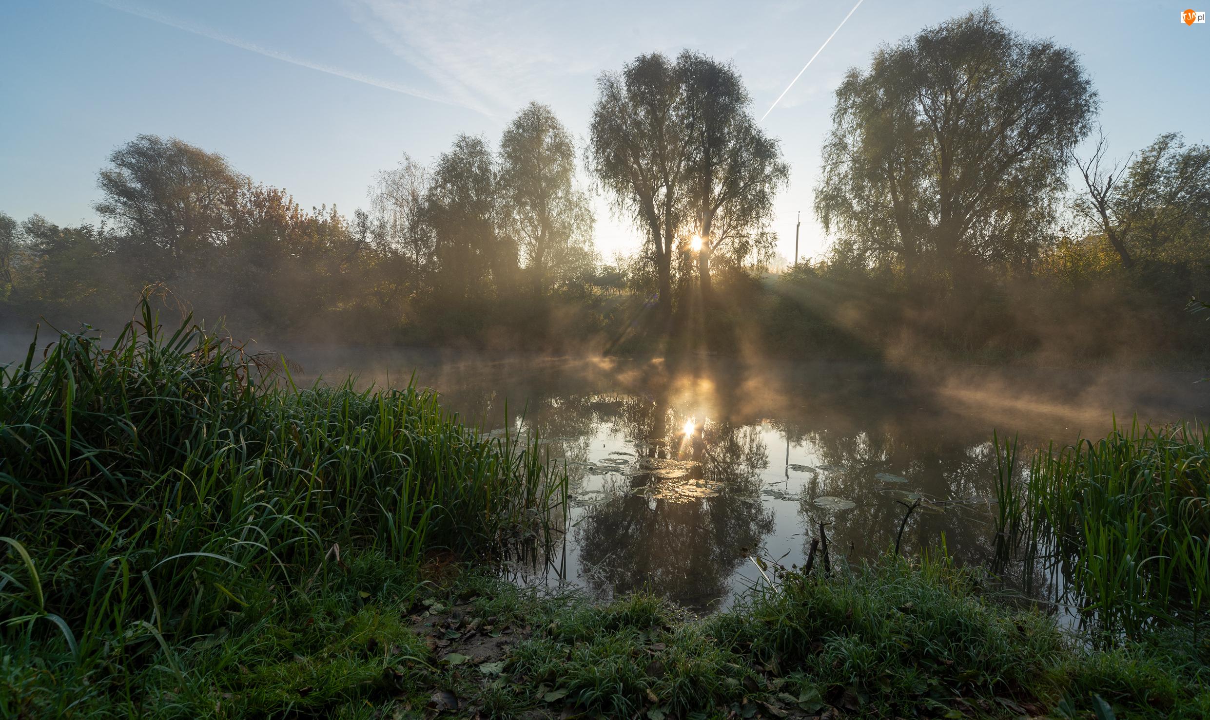 Promienie słońca, Rzeka, Trawy, Drzewa
