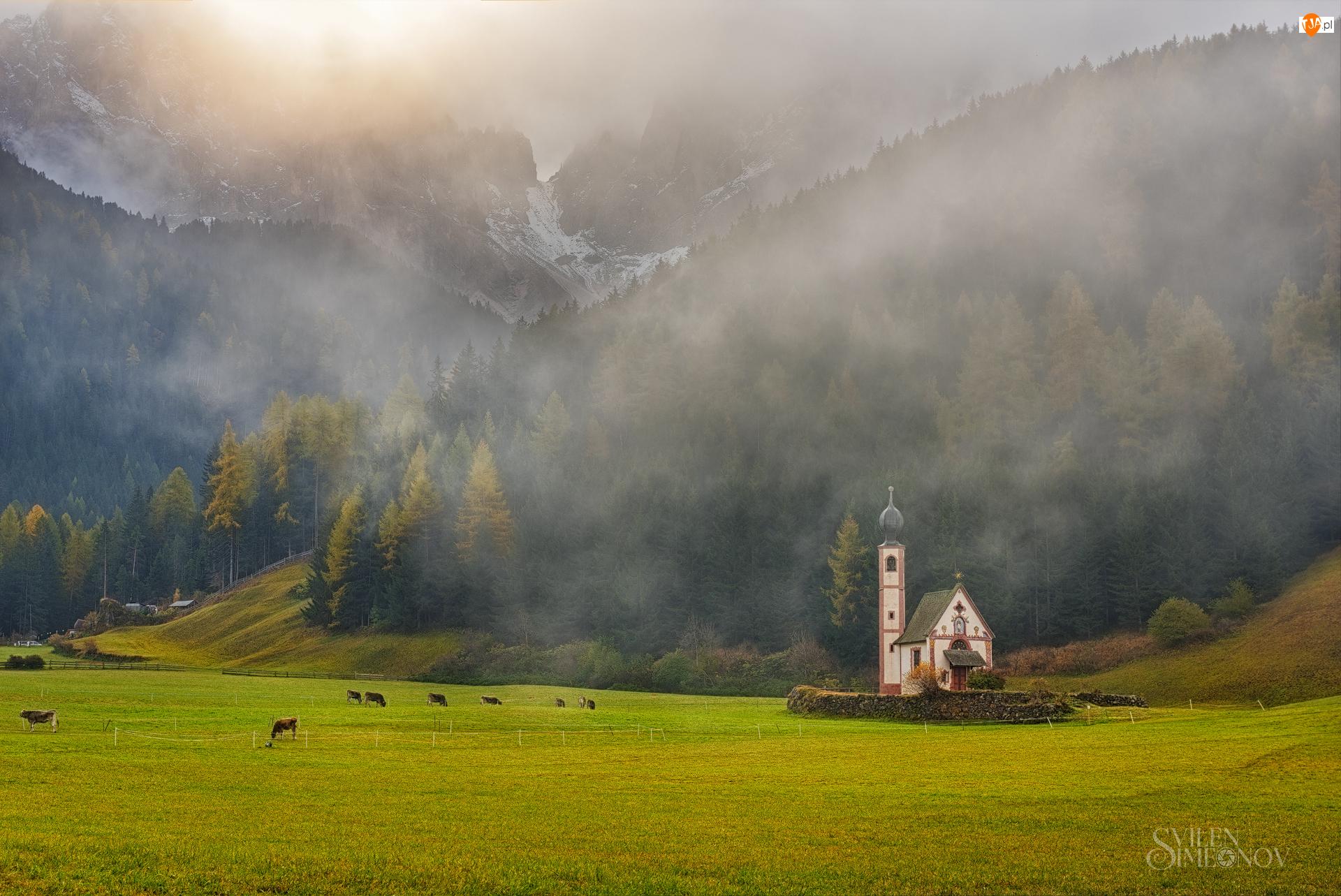 Włochy, Góry, Dolomity, Krowy, Kościół św. Jana, Dolina Val di Funes, Lasy, Wzgórza, Mgła, Prowincja Bolzano