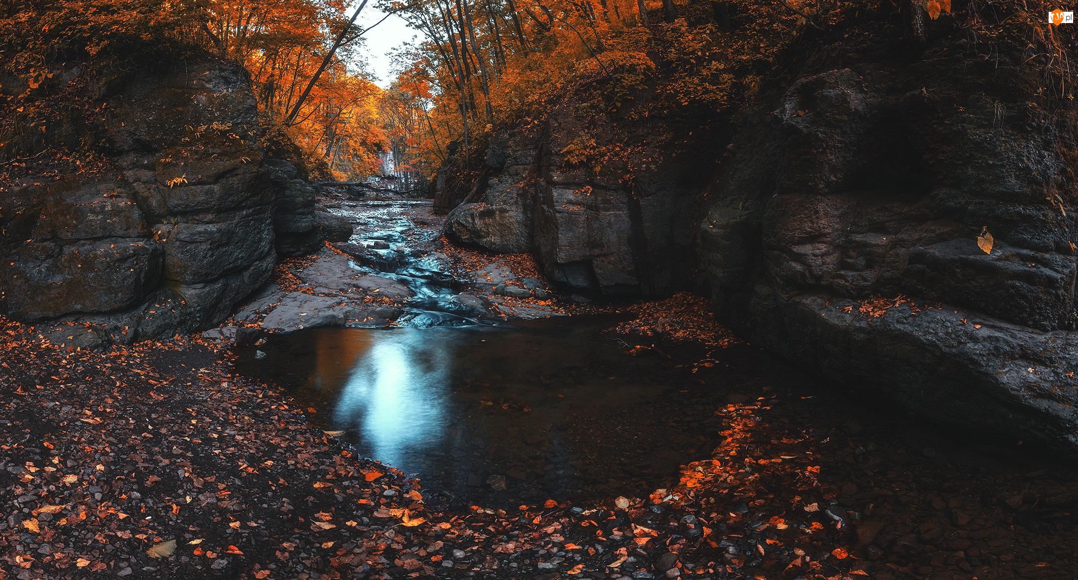 Skały, Jesień, Strumyk, Liście, Drzewa, Rzeczka