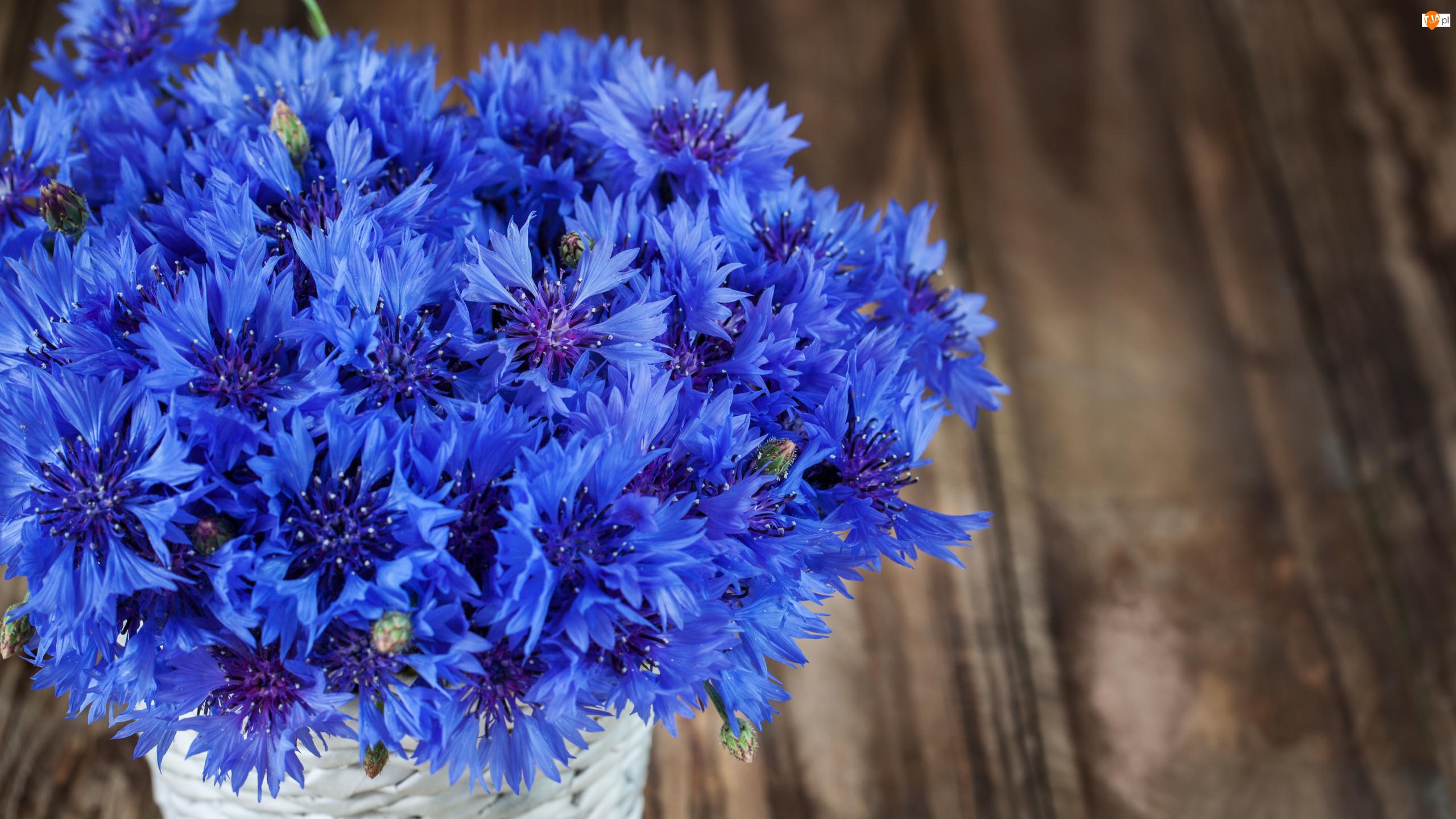 Bukiet, Koszyczek, Niebieskie, Kwiaty, Chabry