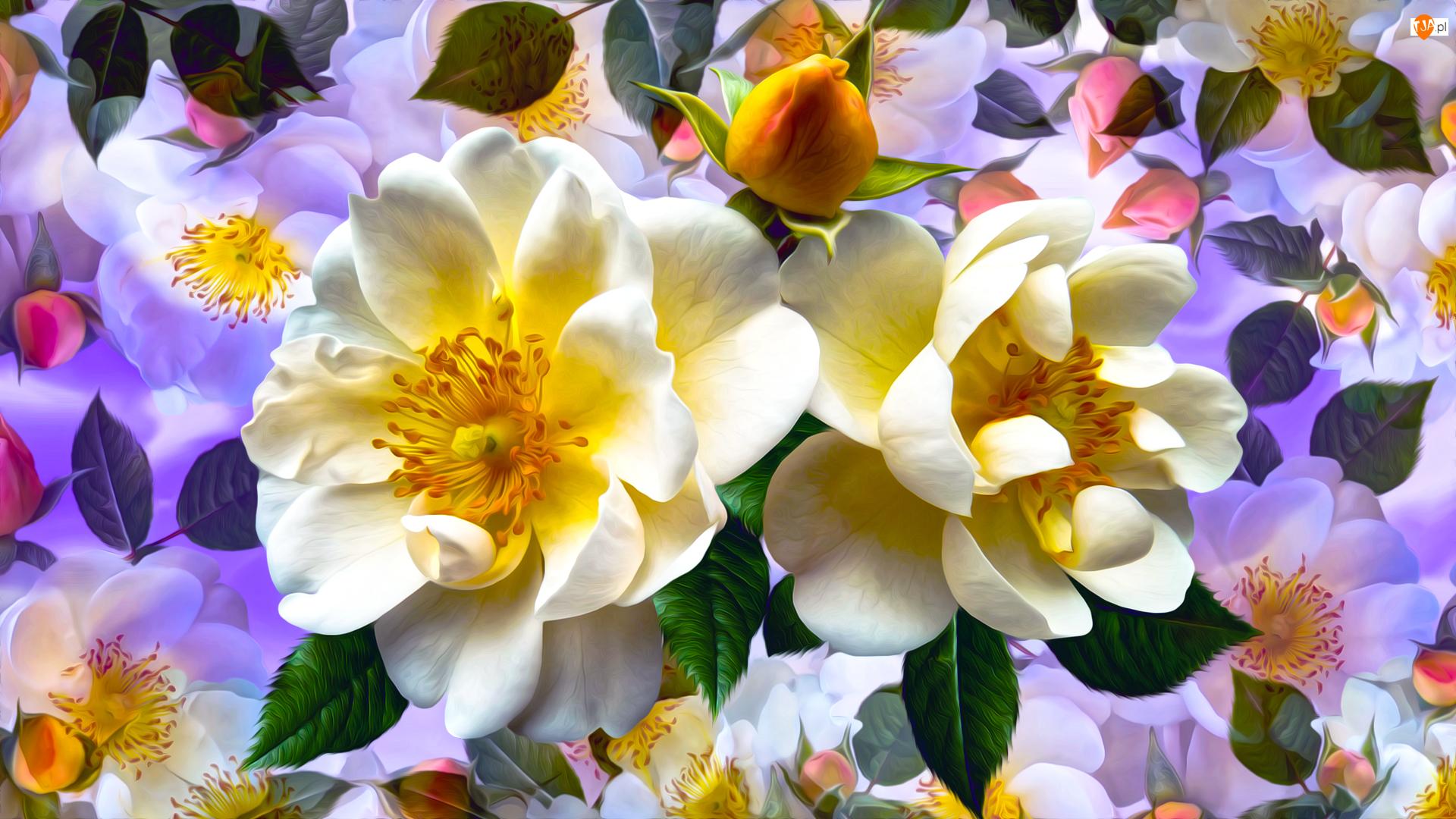 Kolorowe, Grafika, Dzika róża, Kwiaty, Tło