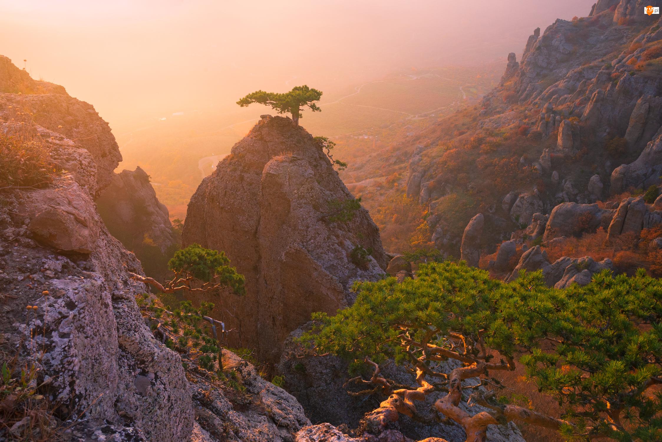 Mgła, Góry, Drzewa, Skały
