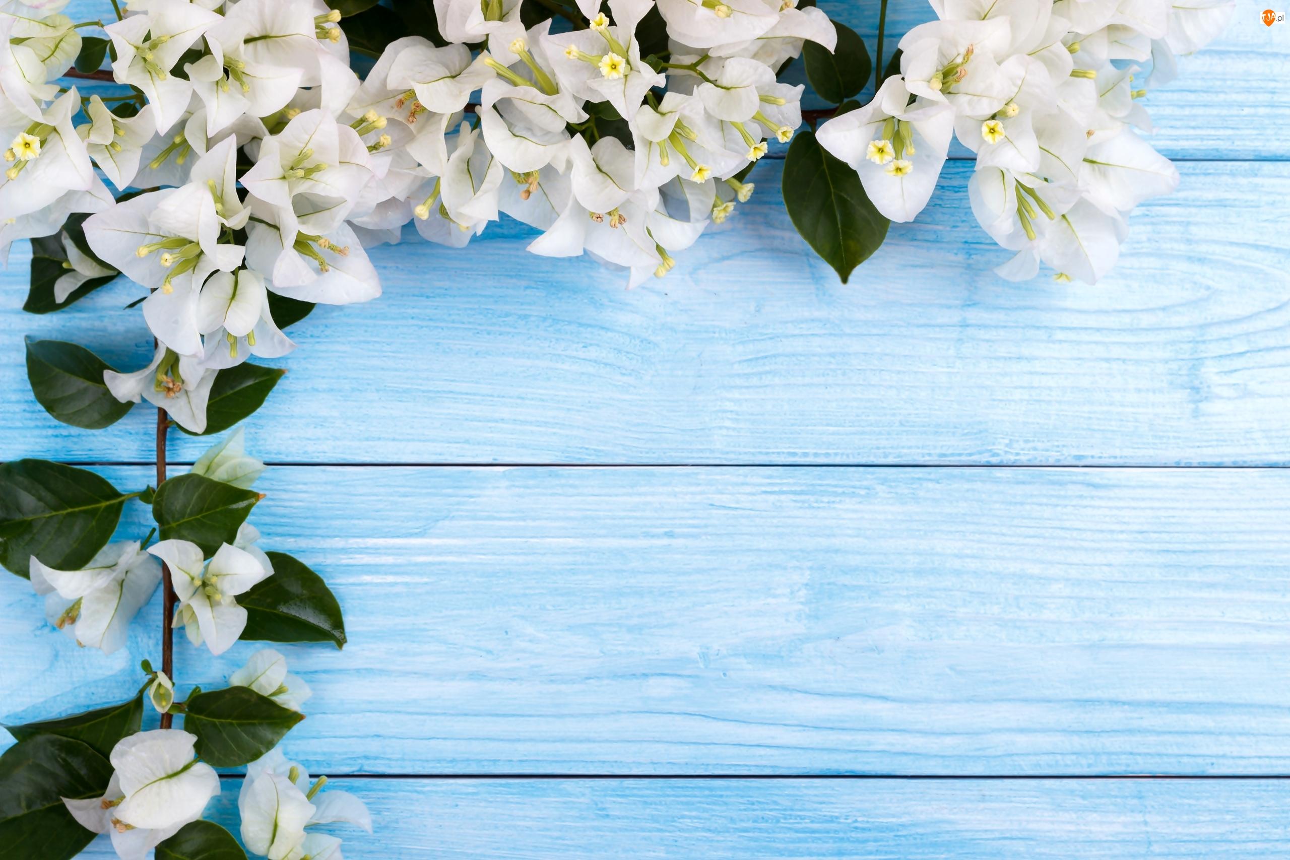 Deski, Białe, Kwiaty, Bugenwilla