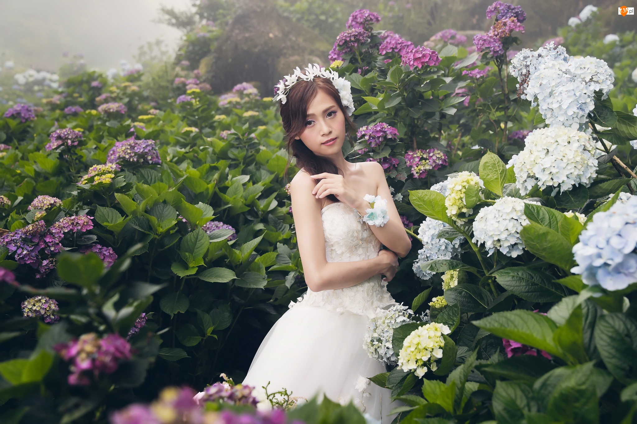 Panna młoda, Hortensje, Azjatka, Kobieta, Kwiaty