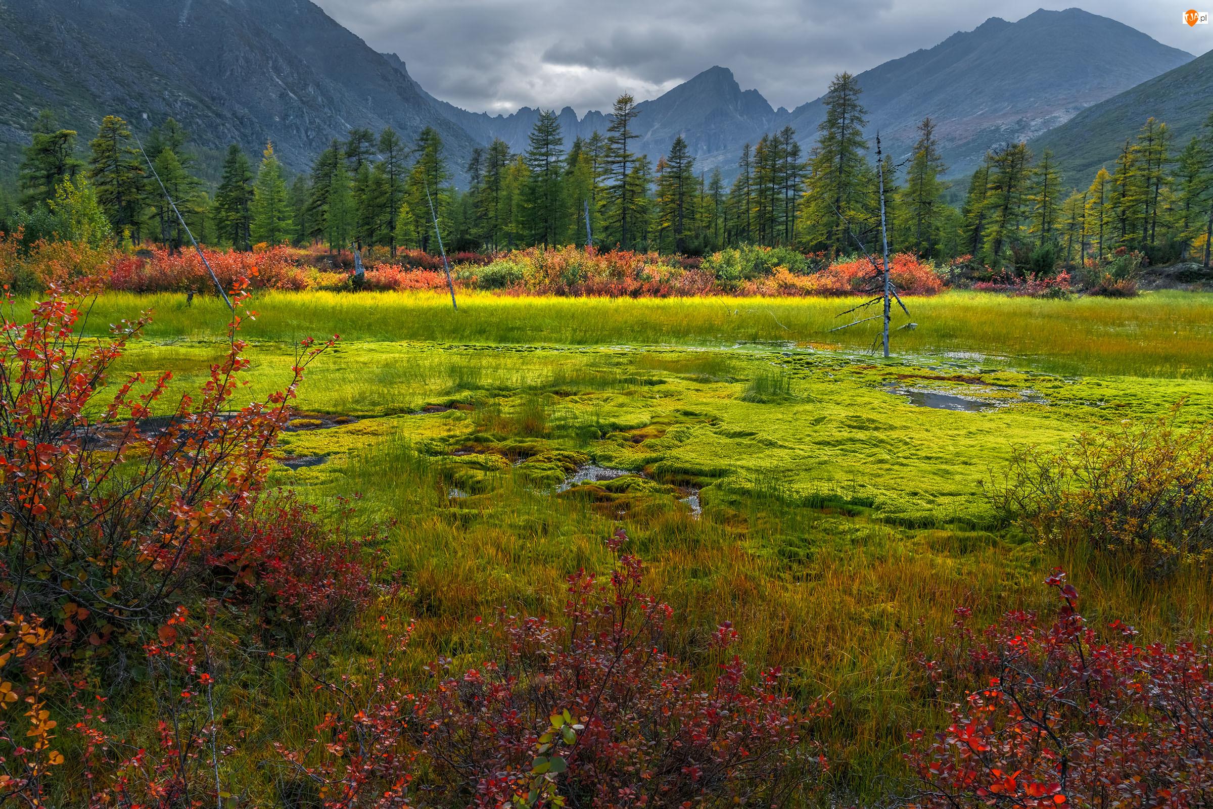 Rosja, Góry Kołymskie, Kołyma, Jezioro Jacka Londona, Chmury, Drzewa, Zarośnięty, Rośliny, Brzeg, Magadan