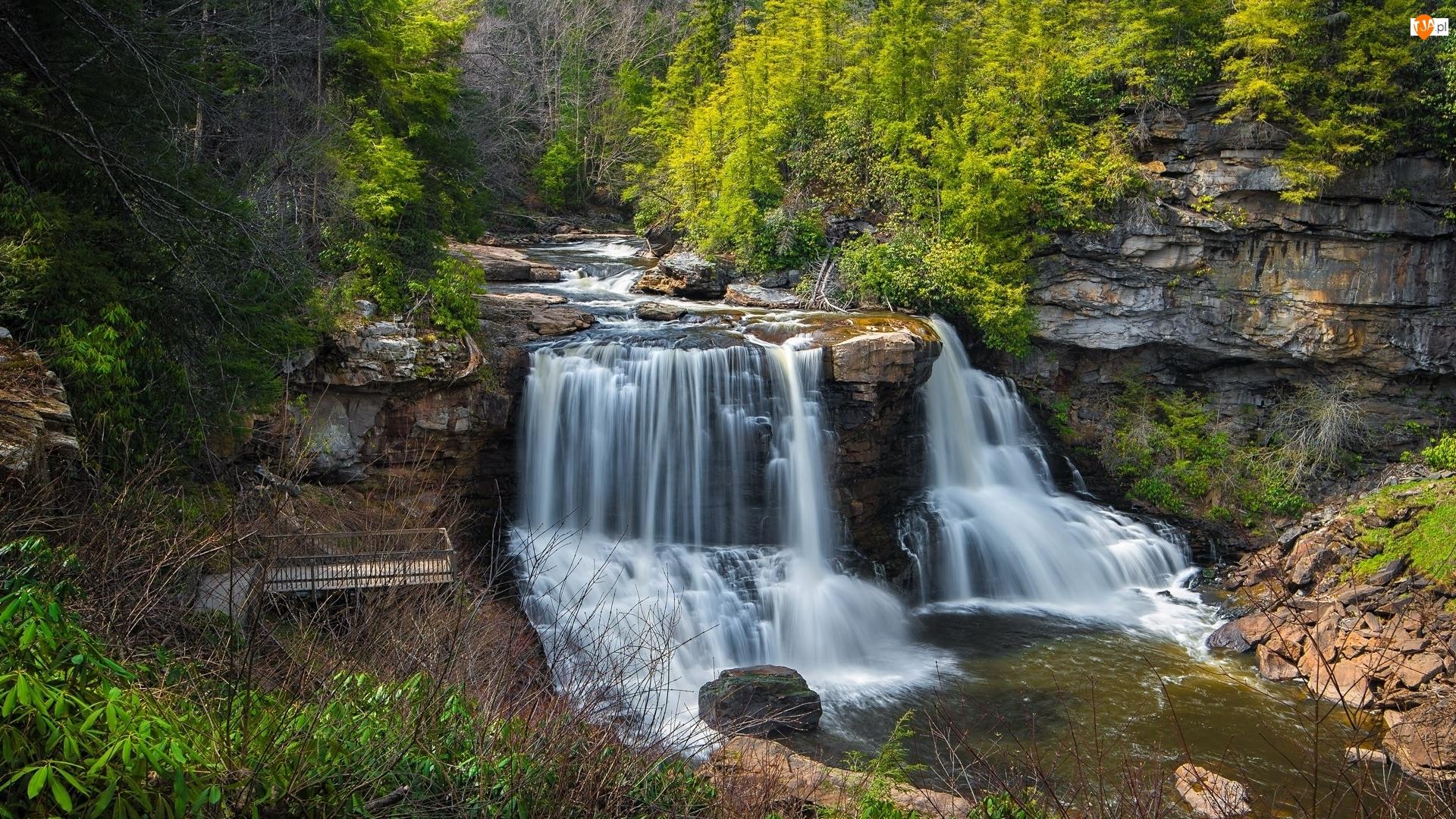 Park stanowy Blackwater, Skały, Drzewa, Stan Wirginia Zachodnia, Rzeka, Kamienie, Stany Zjednoczone, Wodospad Blackwater Falls