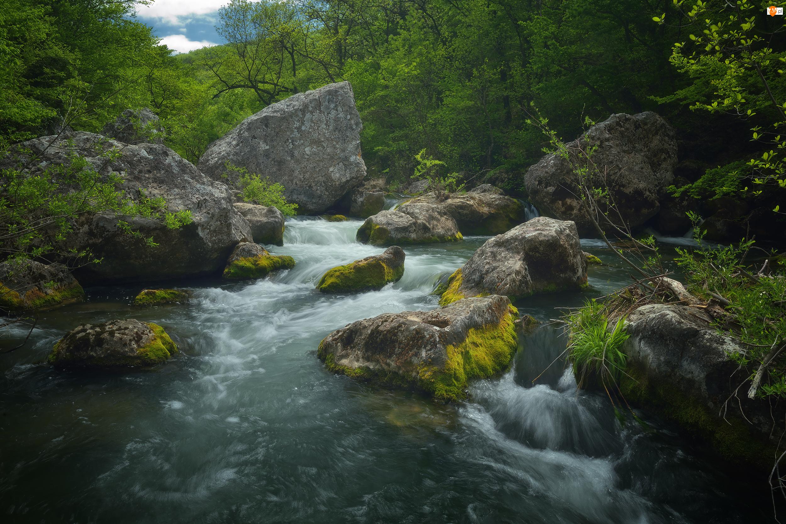 Kamienie, Rzeka Czorna, Drzewa, Krym, Mech, Dolina Bajdarska