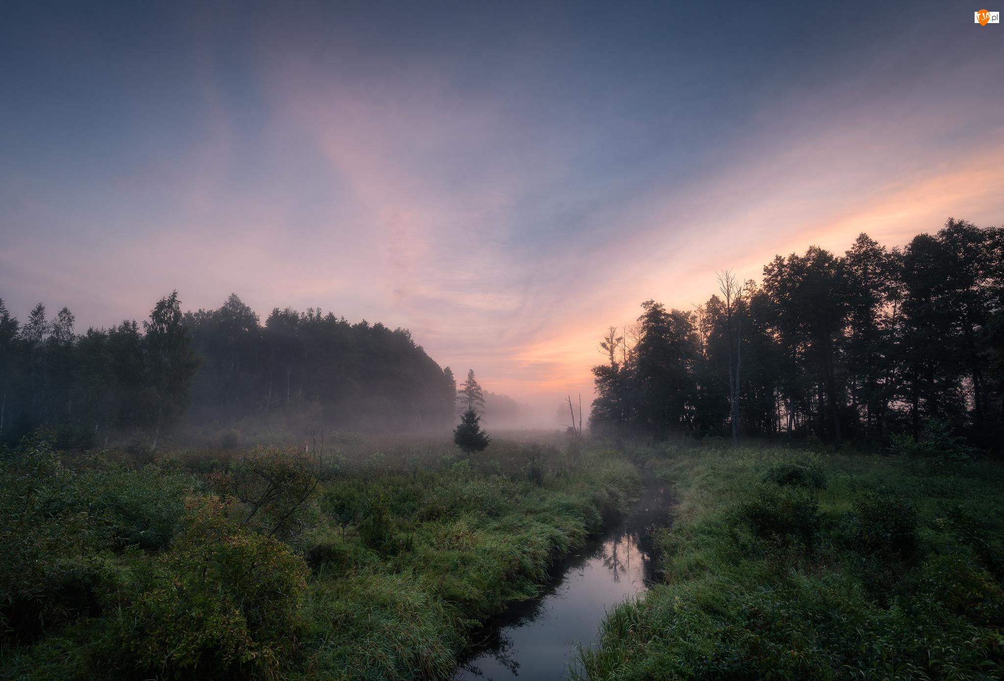 Las, Rzeka, Drzewa, Polska, Mgła, Podlasie