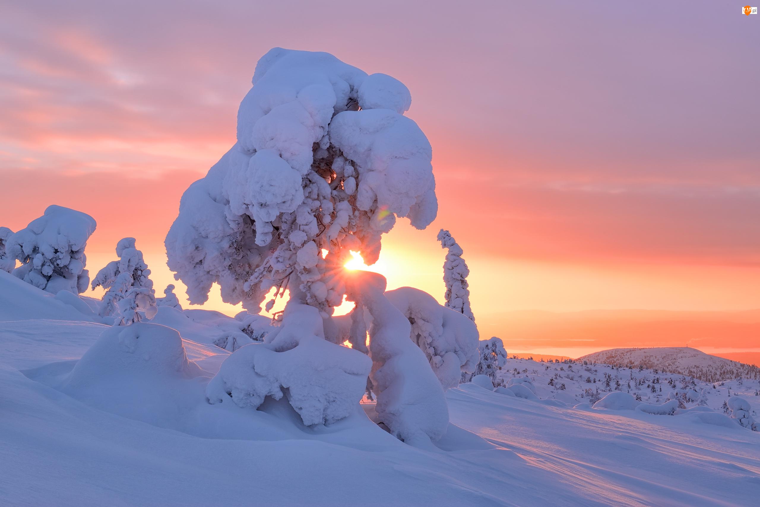 Zima, Śnieg, Rosja, Wschód słońca, Obwód murmański, Kandałaksza, Drzewa