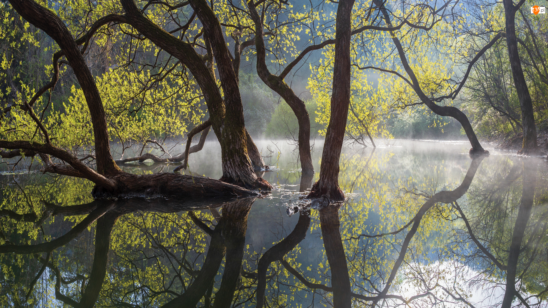 Rzeka, Wiosna, Drzewa