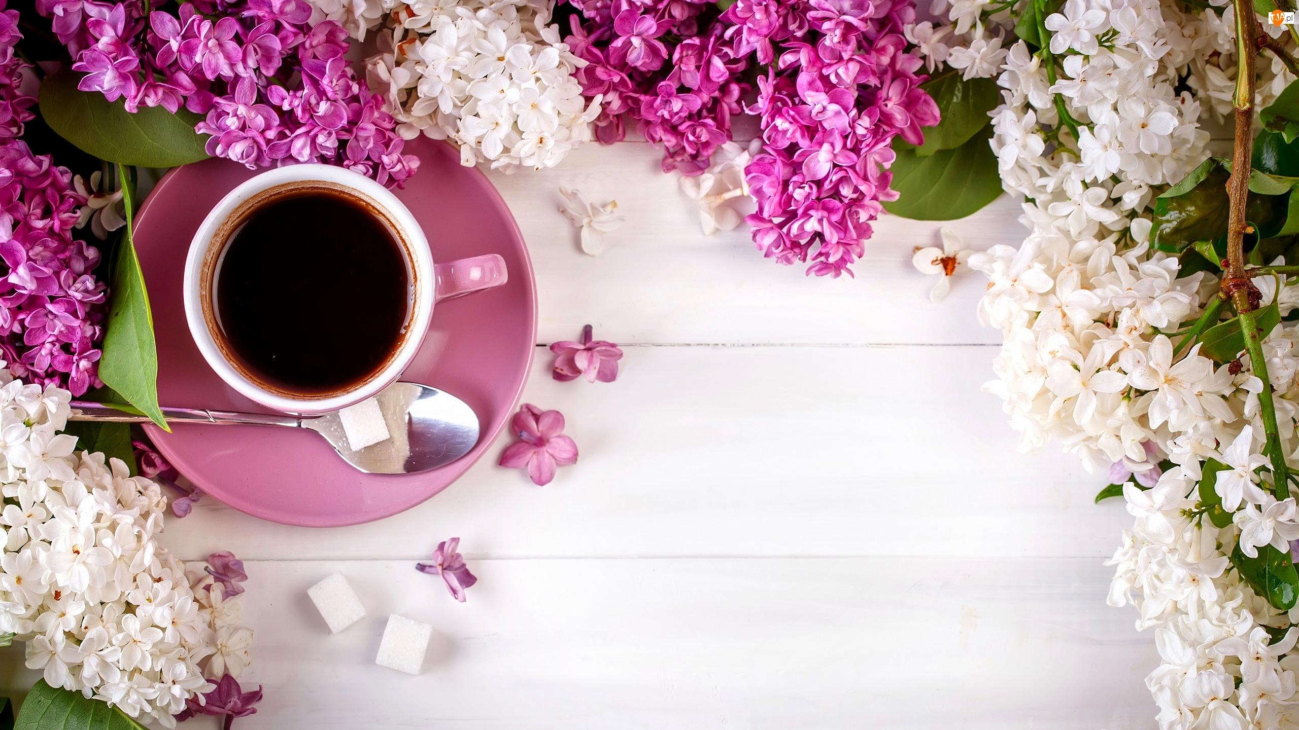 Bez, Filiżanka, Cukru, Kwiat, Kostki, Łyżeczka, Kawy