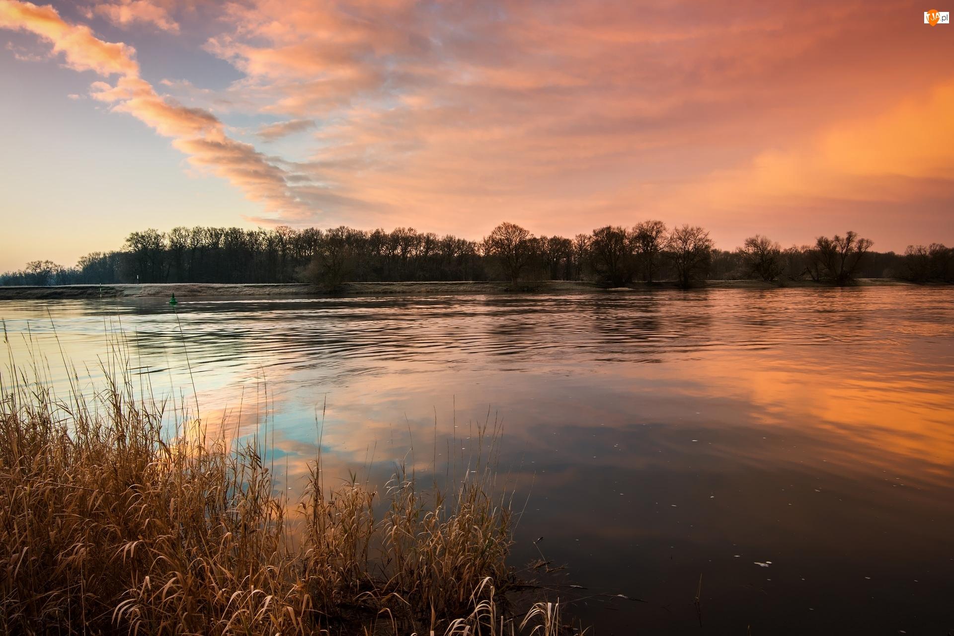 Niemcy, Rzeka Łaba, Drzewa, Wschód słońca