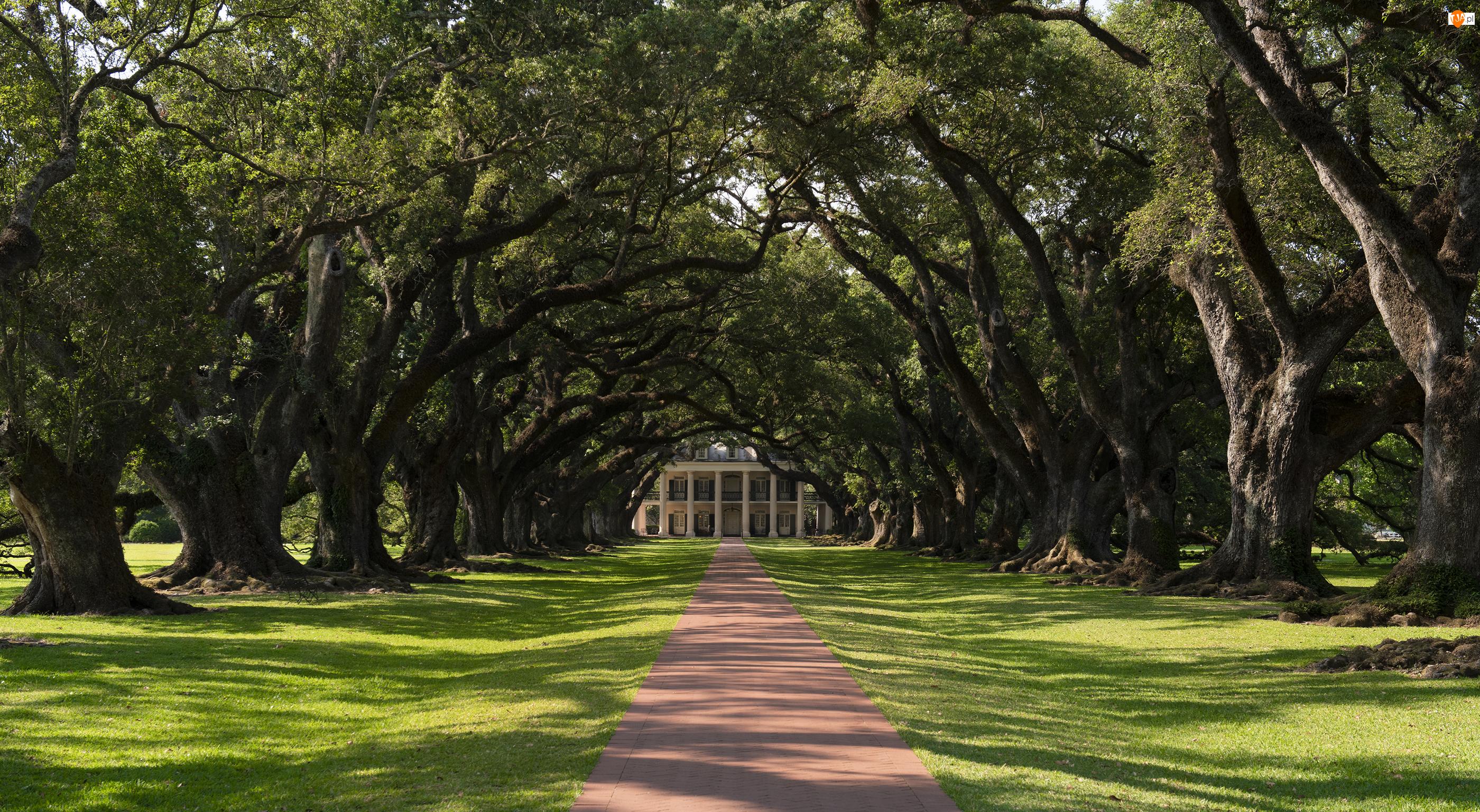 Drzewa, Dęby, Stany Zjednoczone, Aleja, Luizjana, Plantacja Oak Valley, Dom