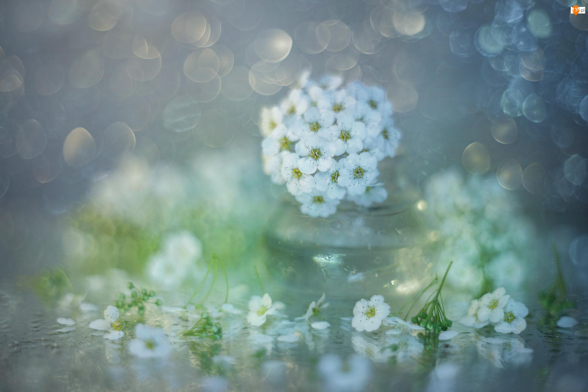 Kwiaty, Wazonik, Białe, Tawuła, Szklany