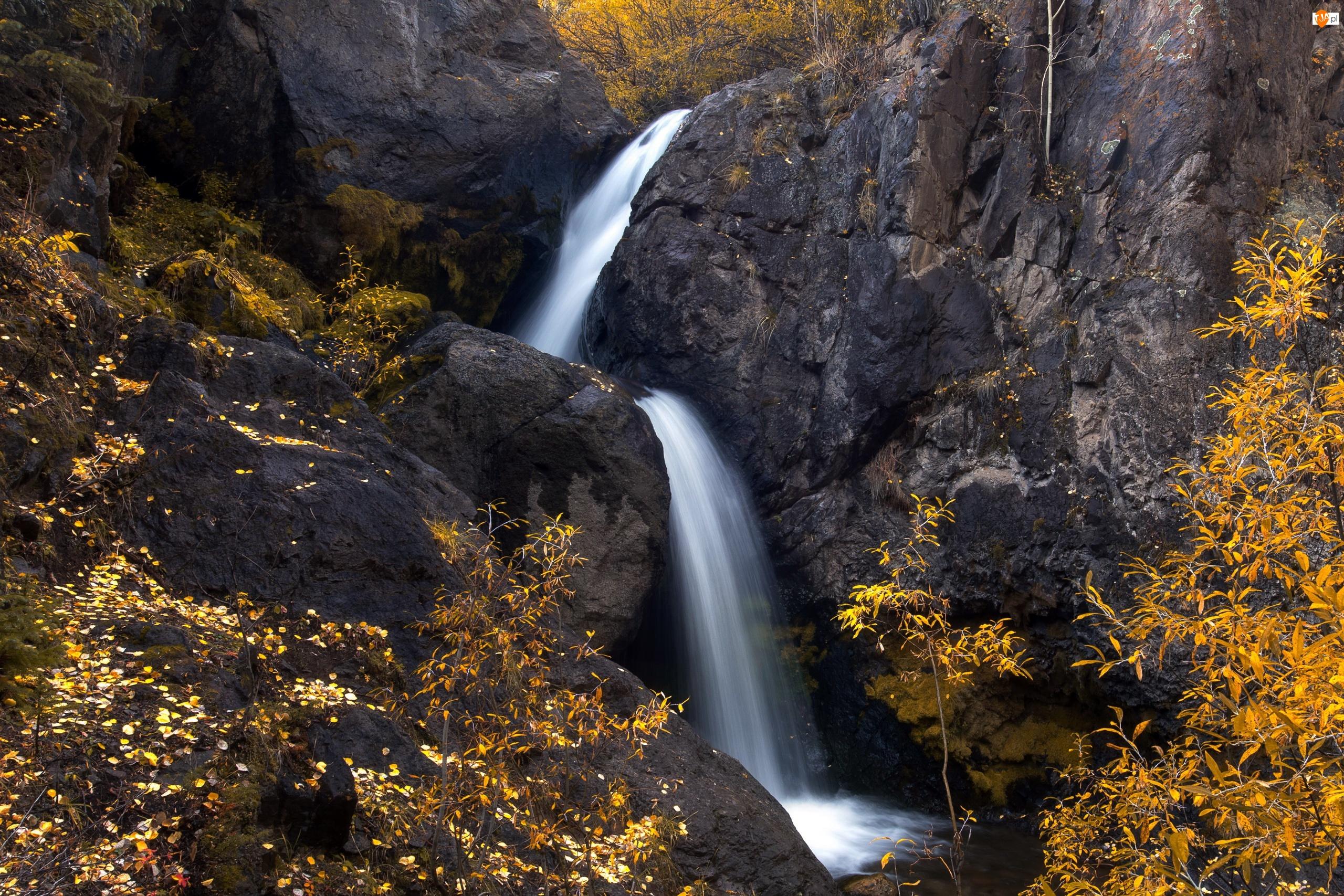 Drzewa, Stany Zjednoczone, Wodospad Nellie Creek, Skały, Kolorado