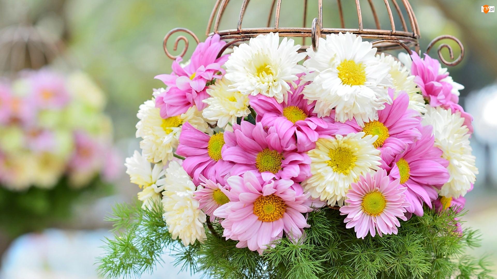 Chryzantema, Bukiet, Kwiatów