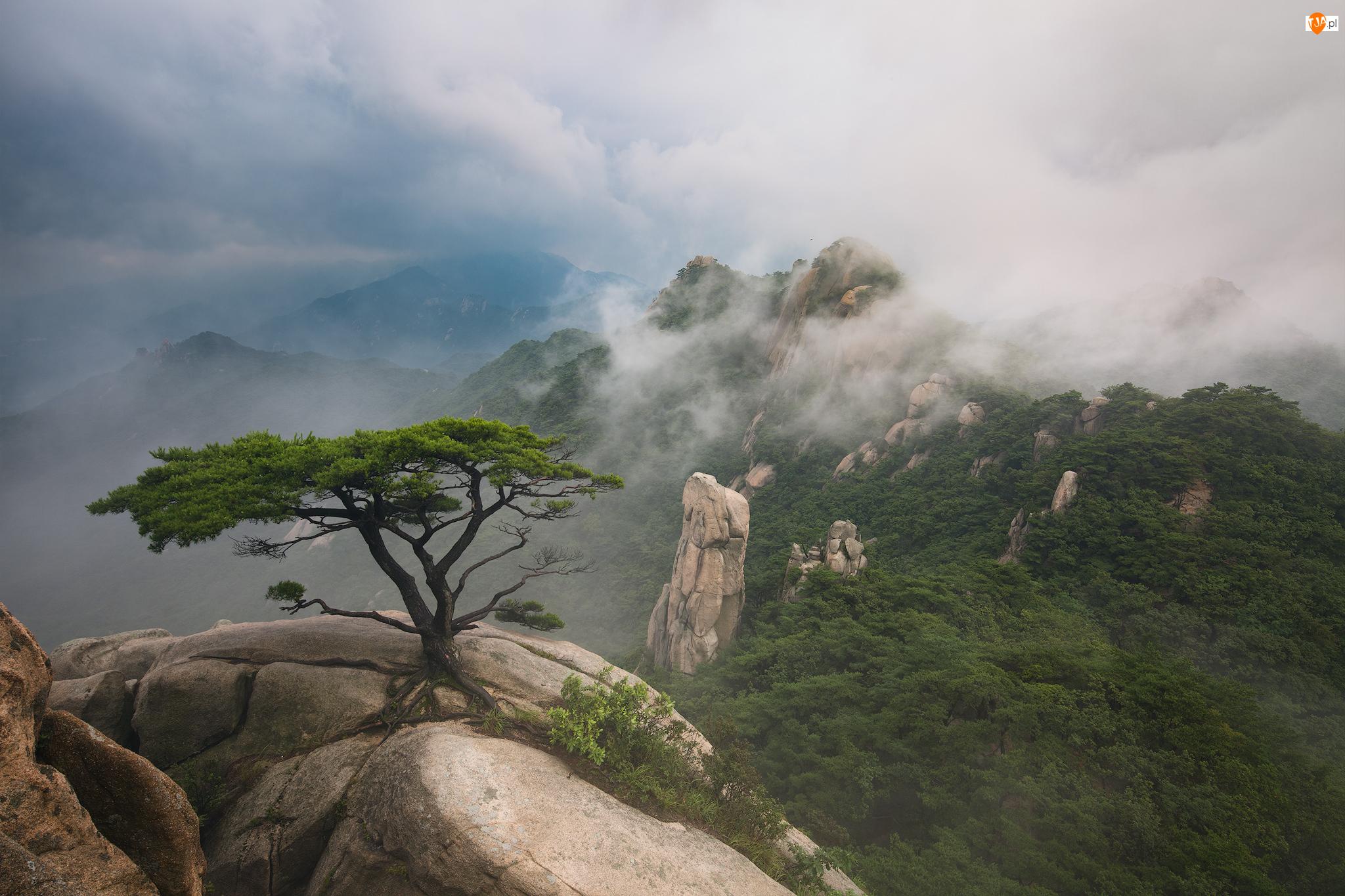 Zima, Skały, Sosna, Kamienie, Dobongsan, Prowincja Gyeonggi-do, Ośnieżone, Park Narodowy Bukhansan, Drzewa, Góry, Korea Południowa