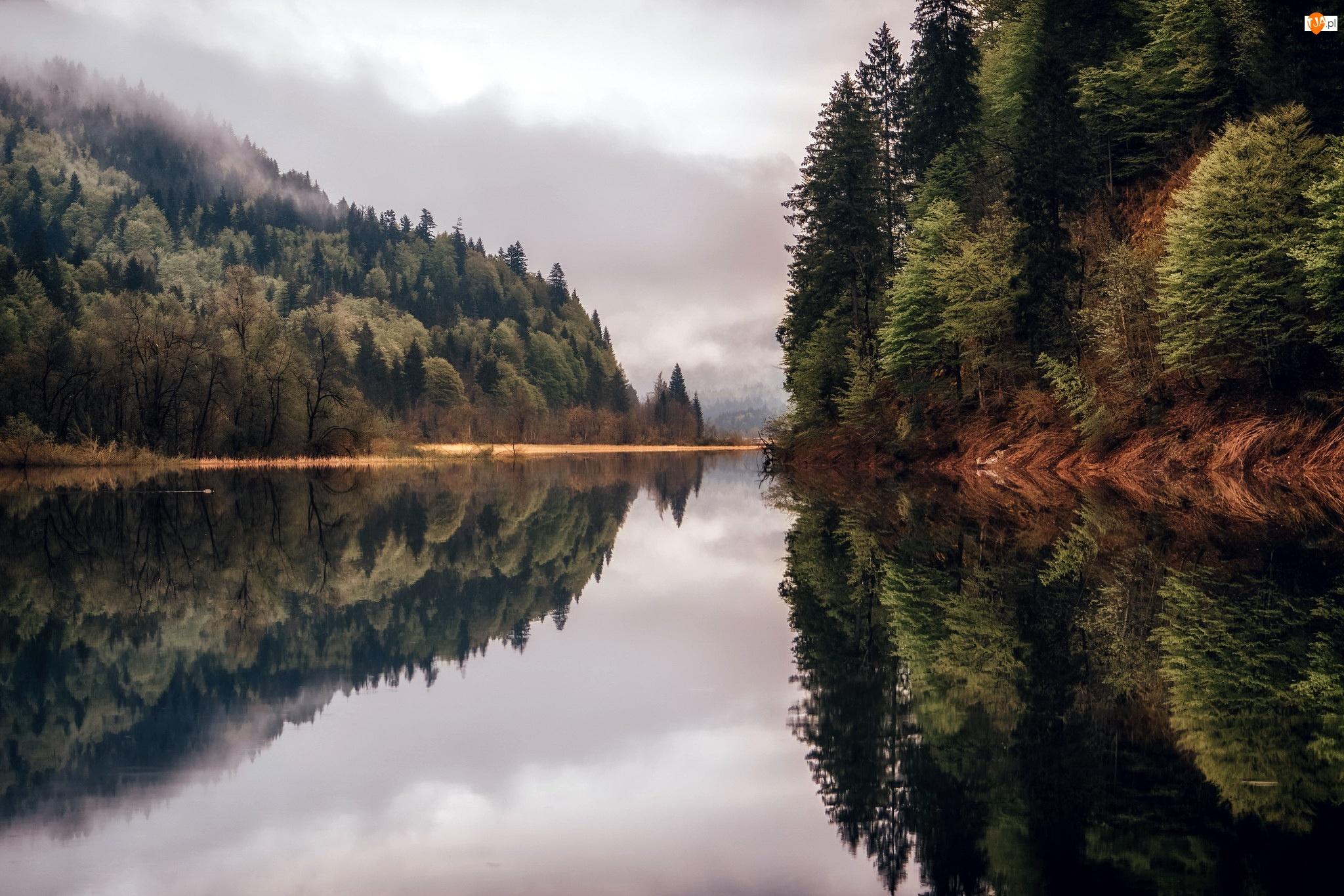 Drzewa, Odbicie, Niemcy, Jezioro Bergsee, Bawaria, Mgła, Las