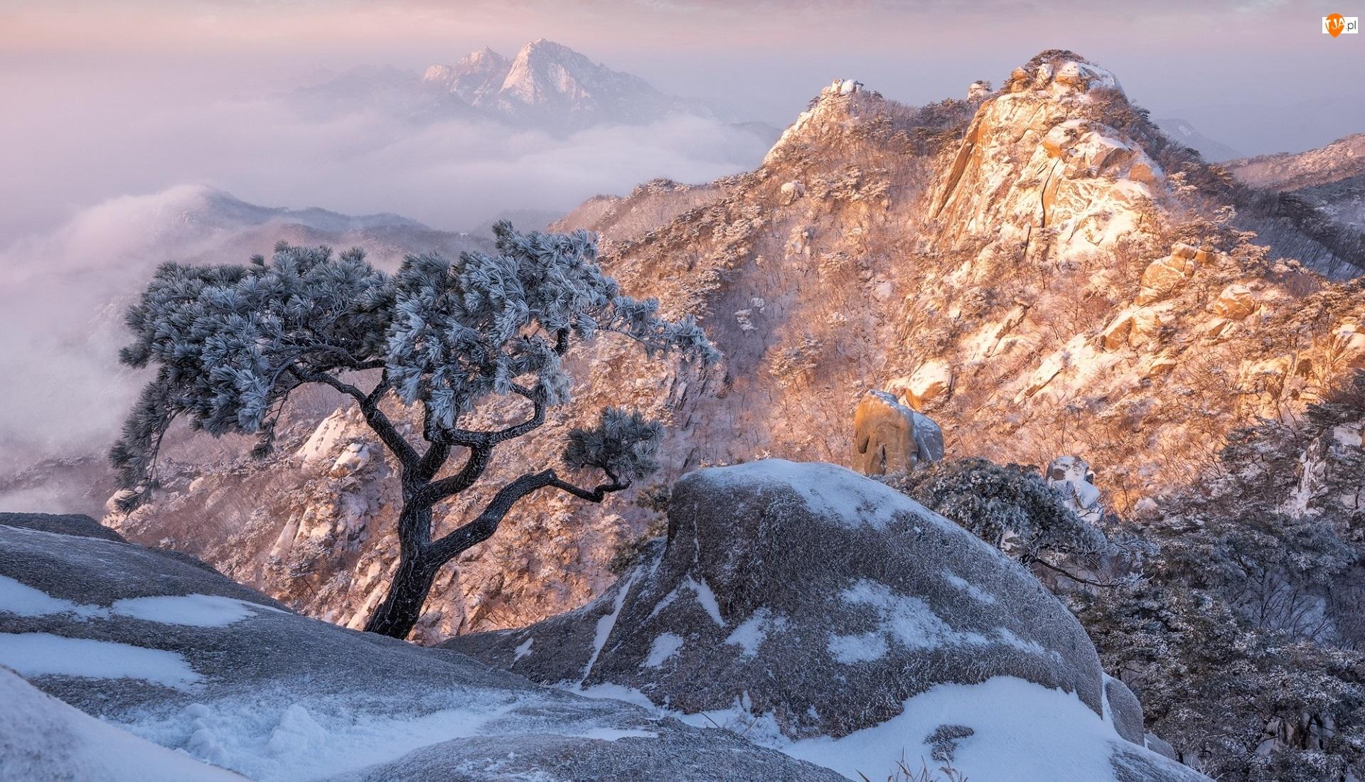 Korea Południowa, Drzewo, Sosna, Kamienie, Góry, Park Narodowy Bukhansan, Ośnieżone, Zima, Skały, Prowincja Gyeonggi-do