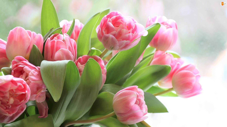 Bukiet, Kwiaty, Różowe, Tulipany