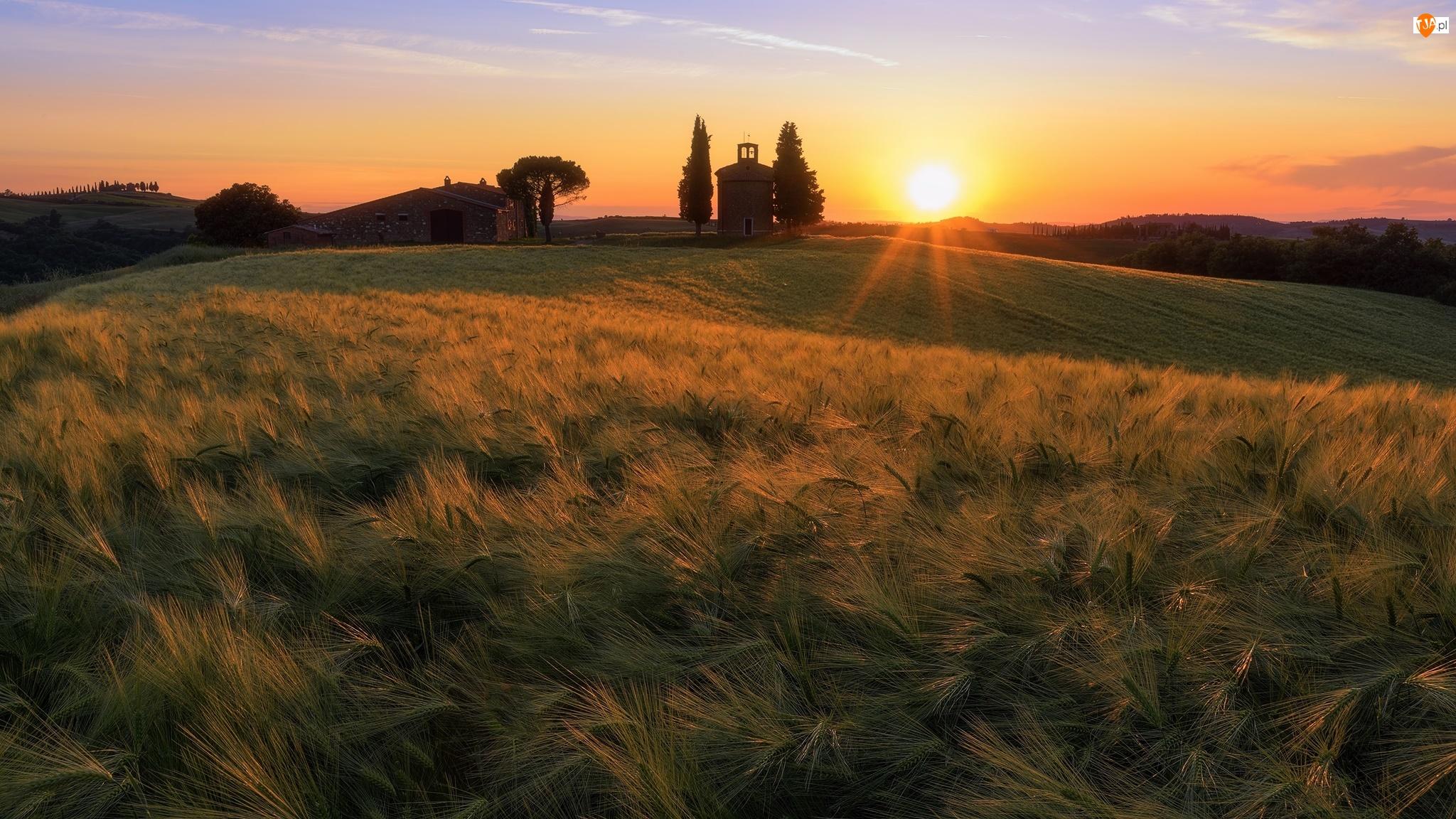 Zachód słońca, Pole, Wieża, Toskania, Zboże, Dzwonnica, Włochy, Dom