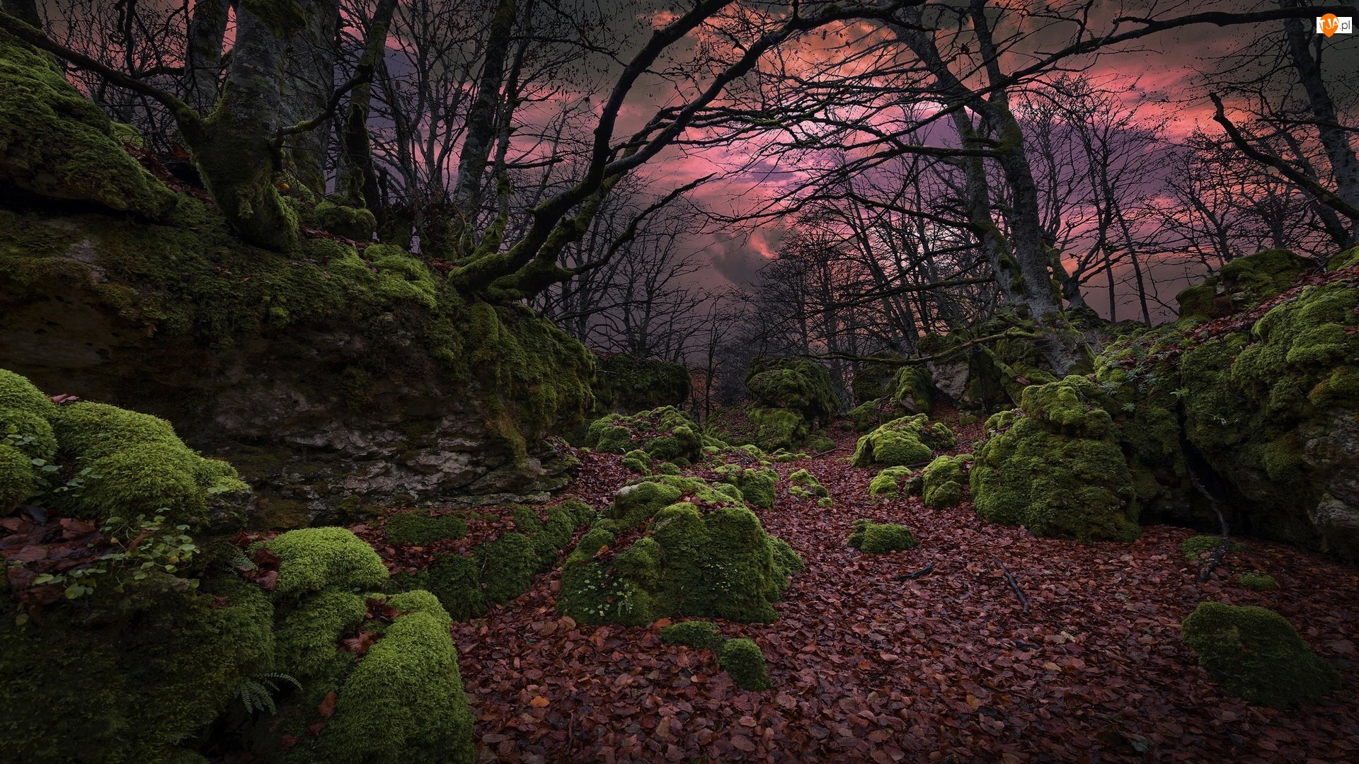 Omszałe, Las, Skały, Liście, Kamienie, Drzewa