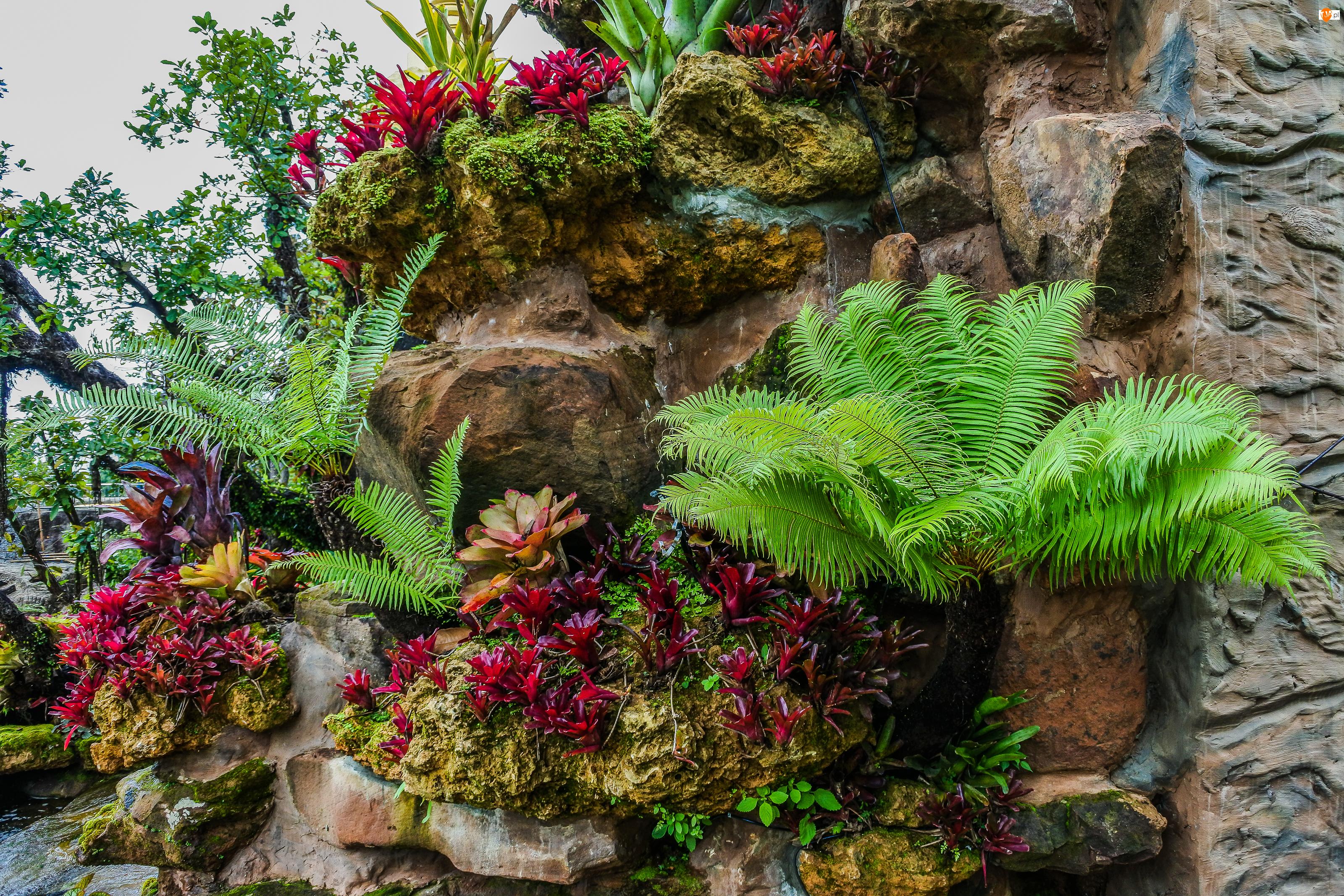 Kwiaty, Paproć, Skała, Ogród, Rośliny