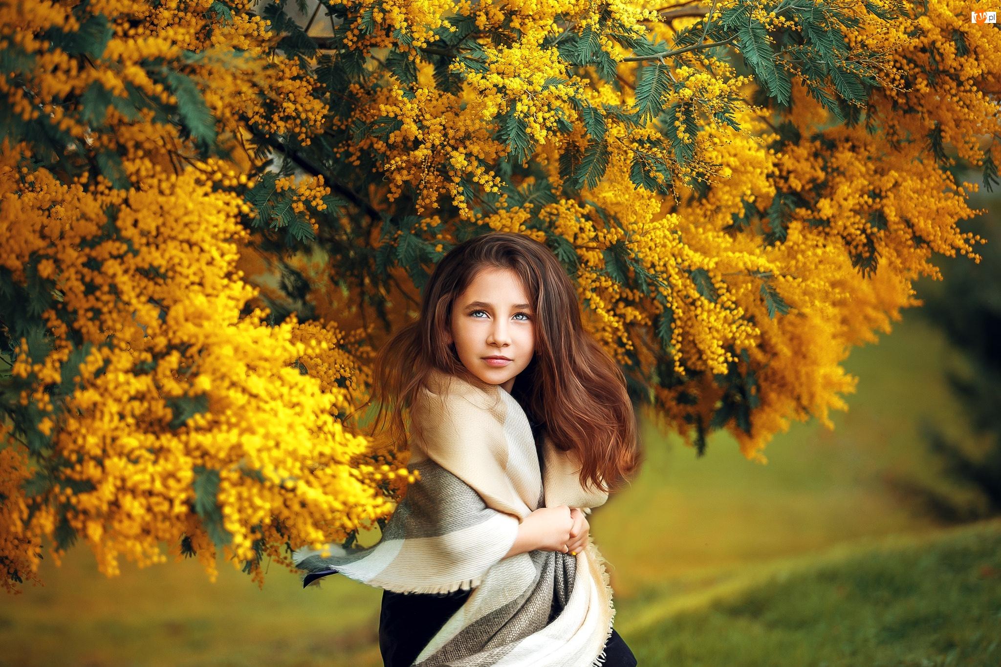 Szal, Dziewczynka, Drzewo, Akacja srebrzysta