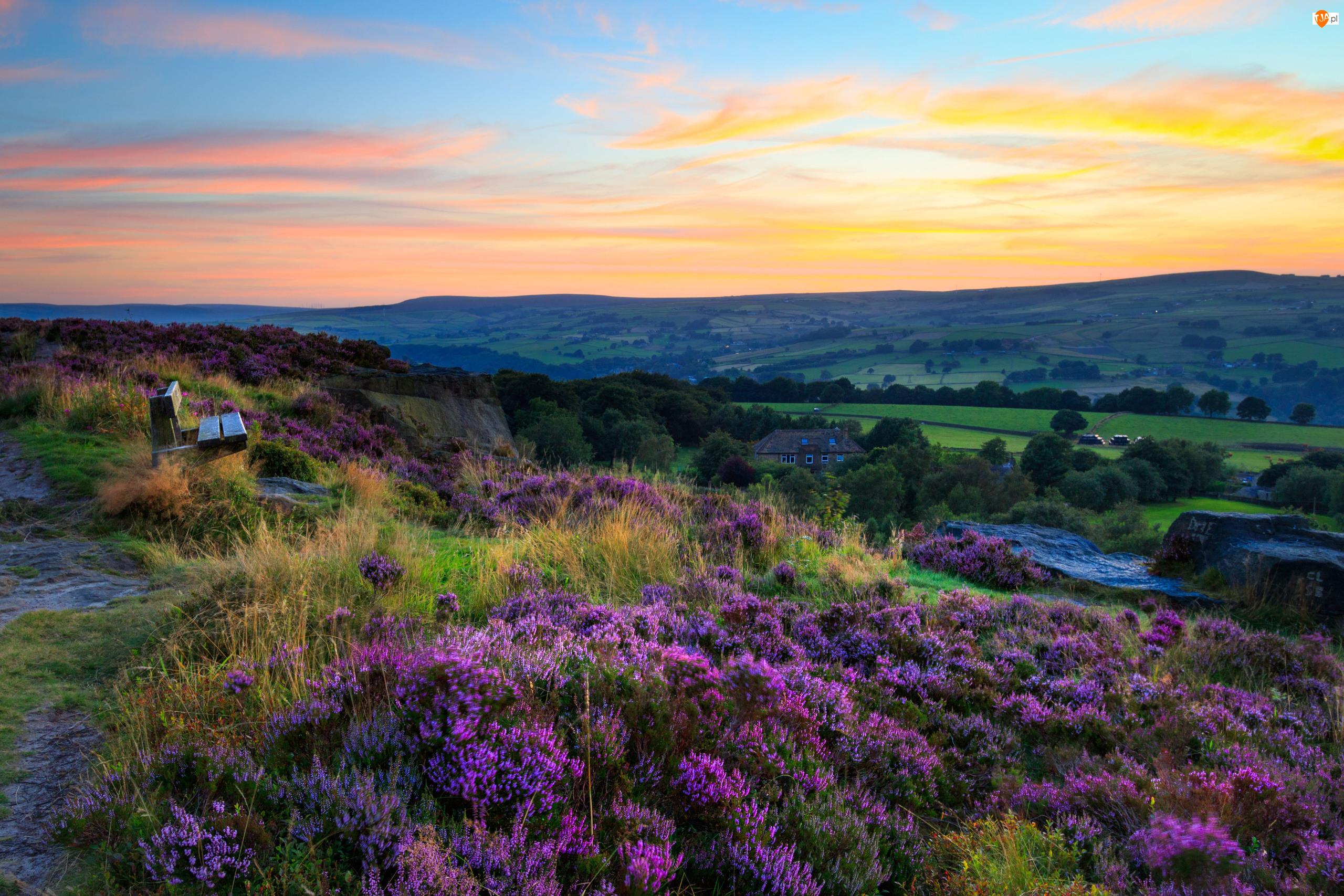 Kwiaty, Anglia, Ławka, Wrzosowisko, Zachodnie Yorkshire, Przyroda, Wrzosy, Norland Moor