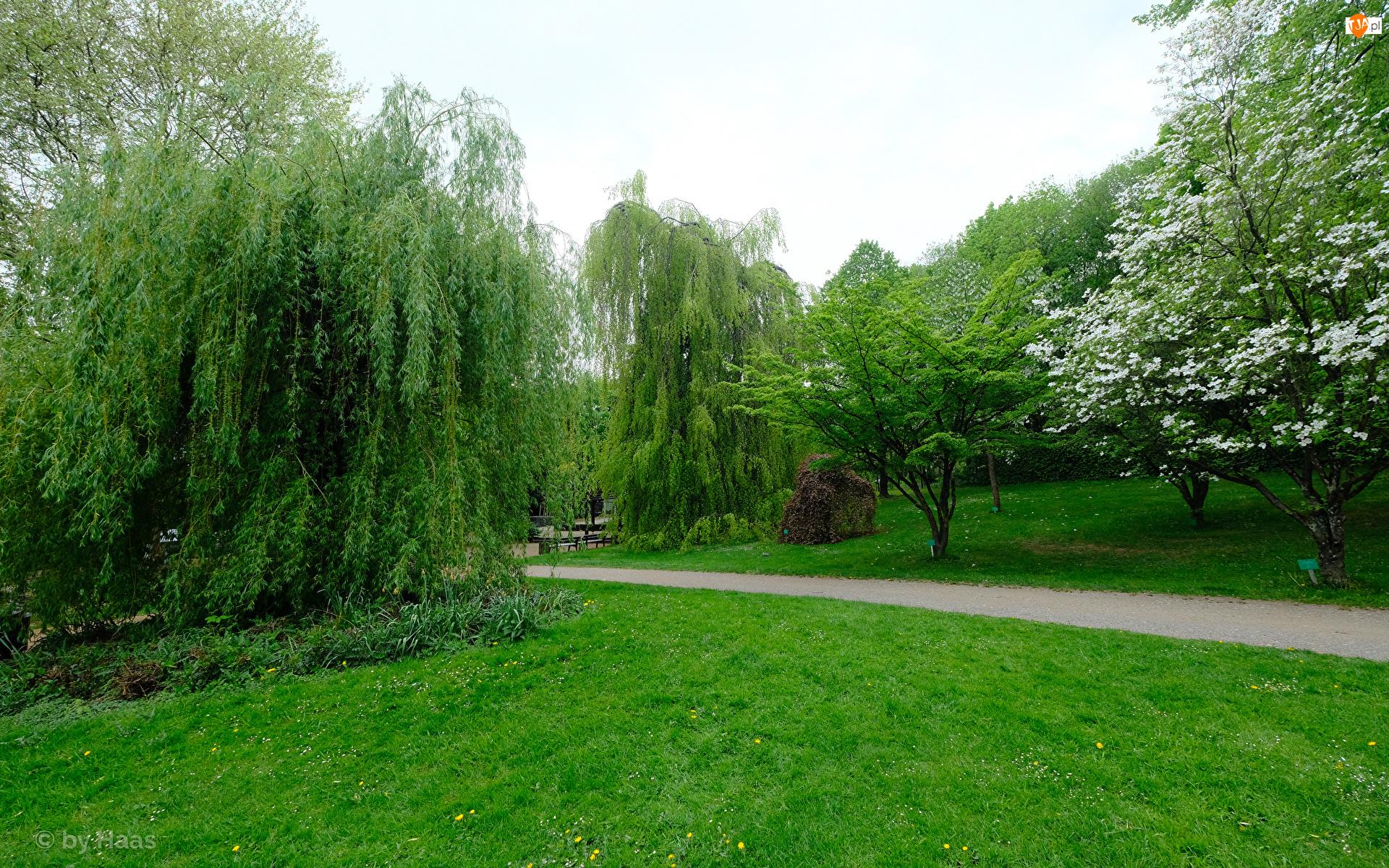 Wiosna, Park, Wierzba, Ścieżka, Drzewa, Trawnik