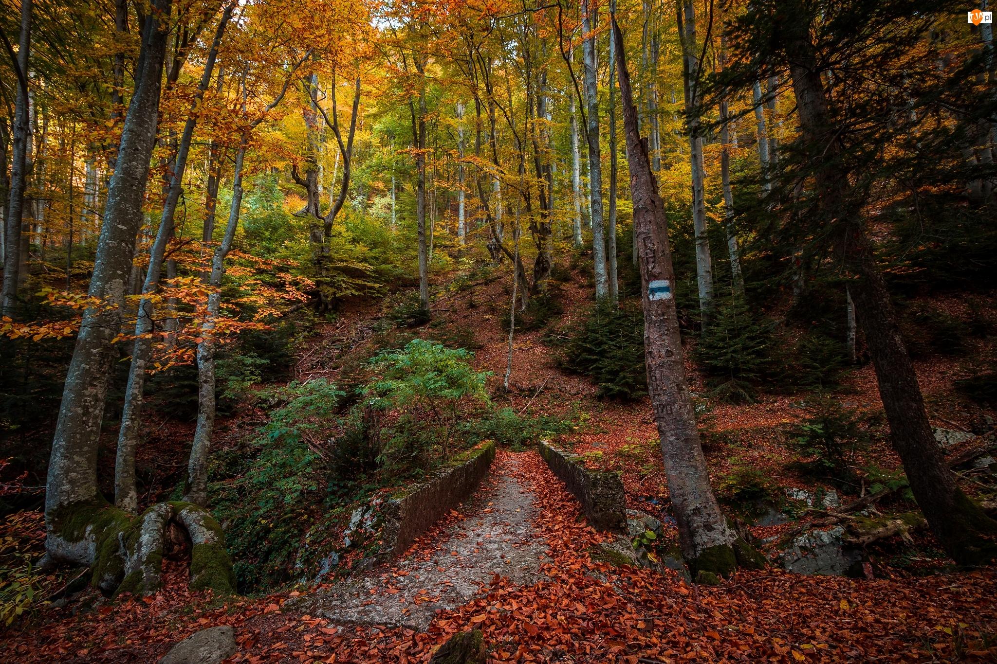 Drzewa, Las, Szlak, Jesień, Ścieżka, Mostek