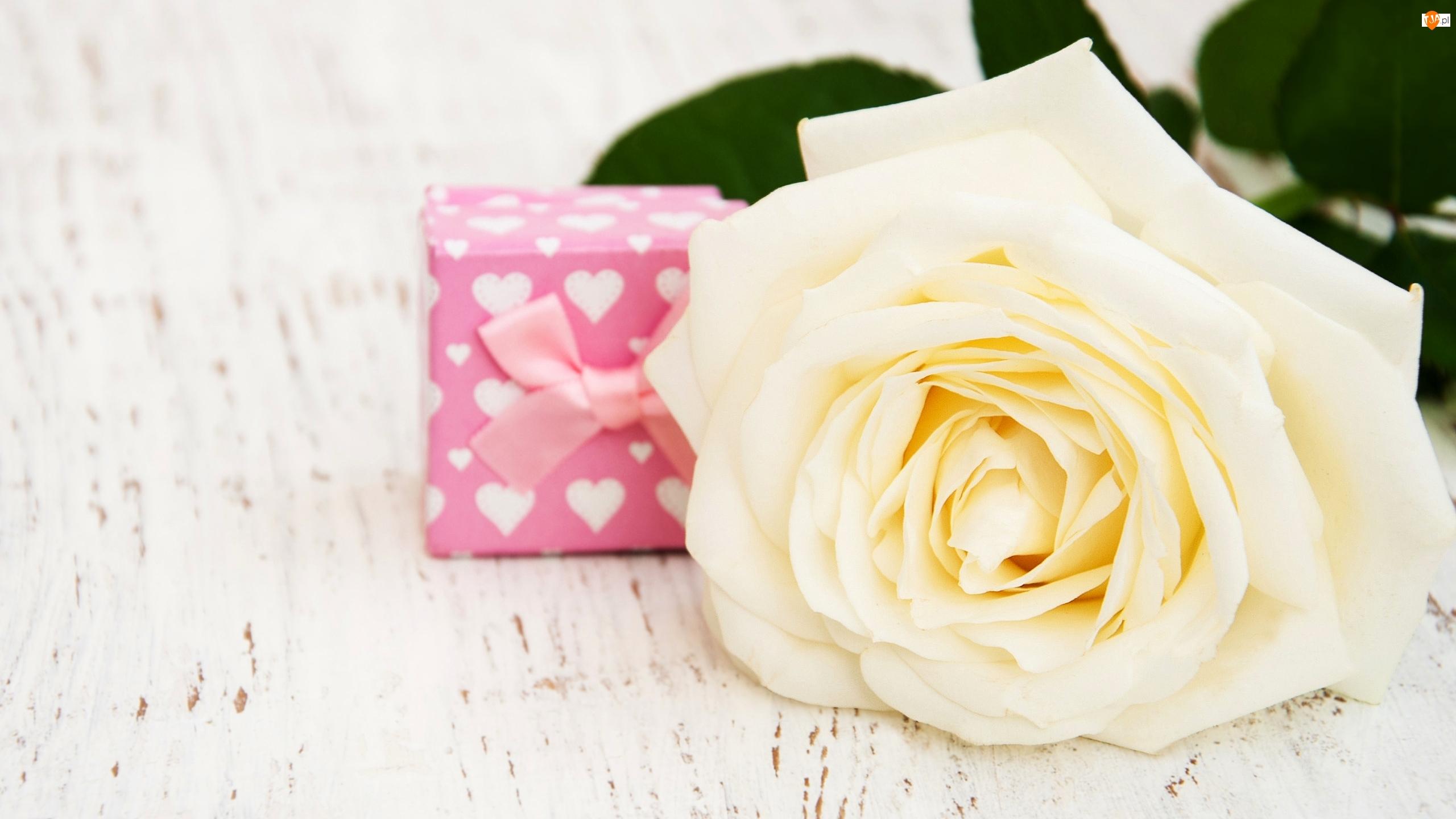 Prezent, Biała, Róża, Pudełko